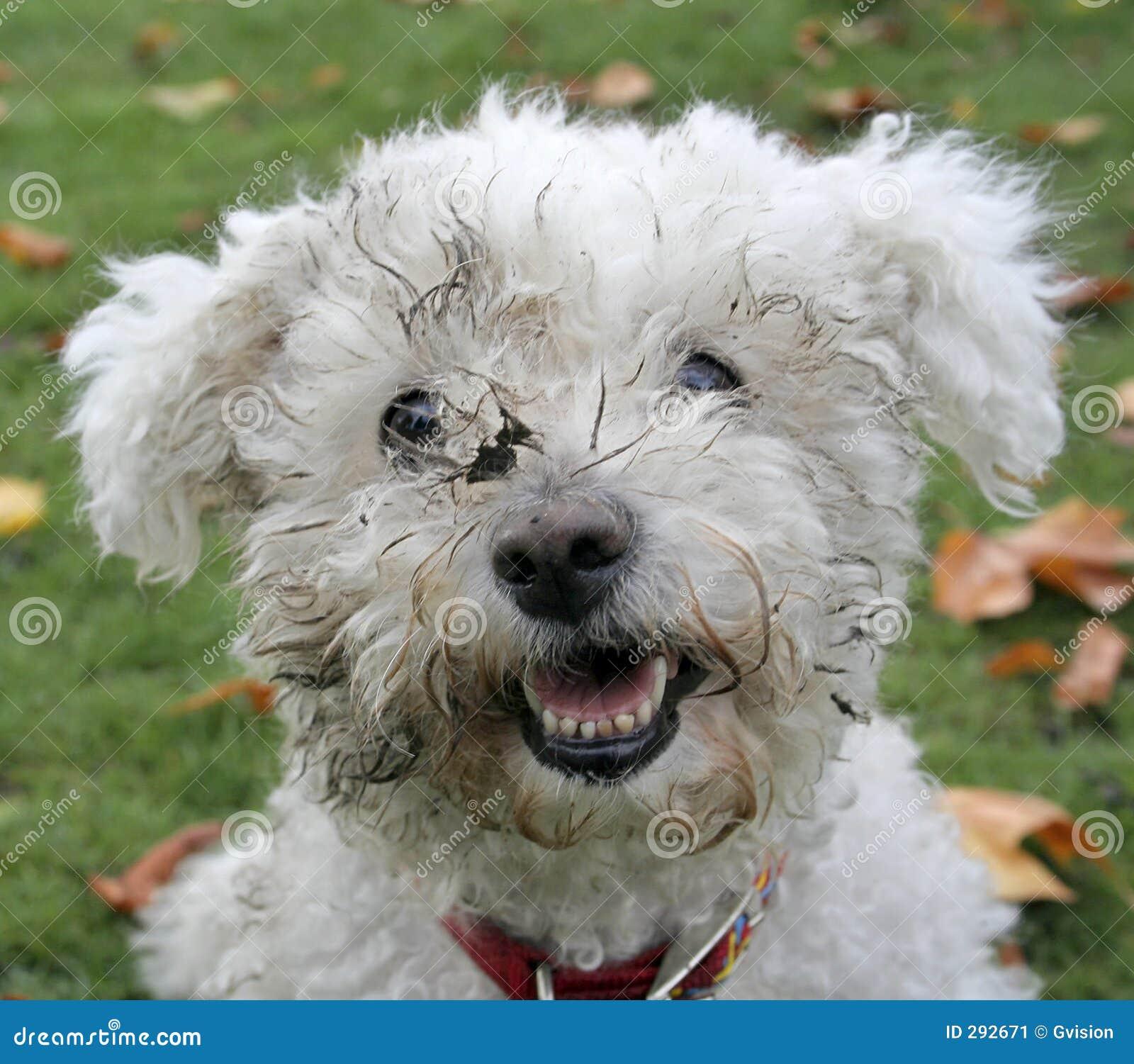 Vuile Hond