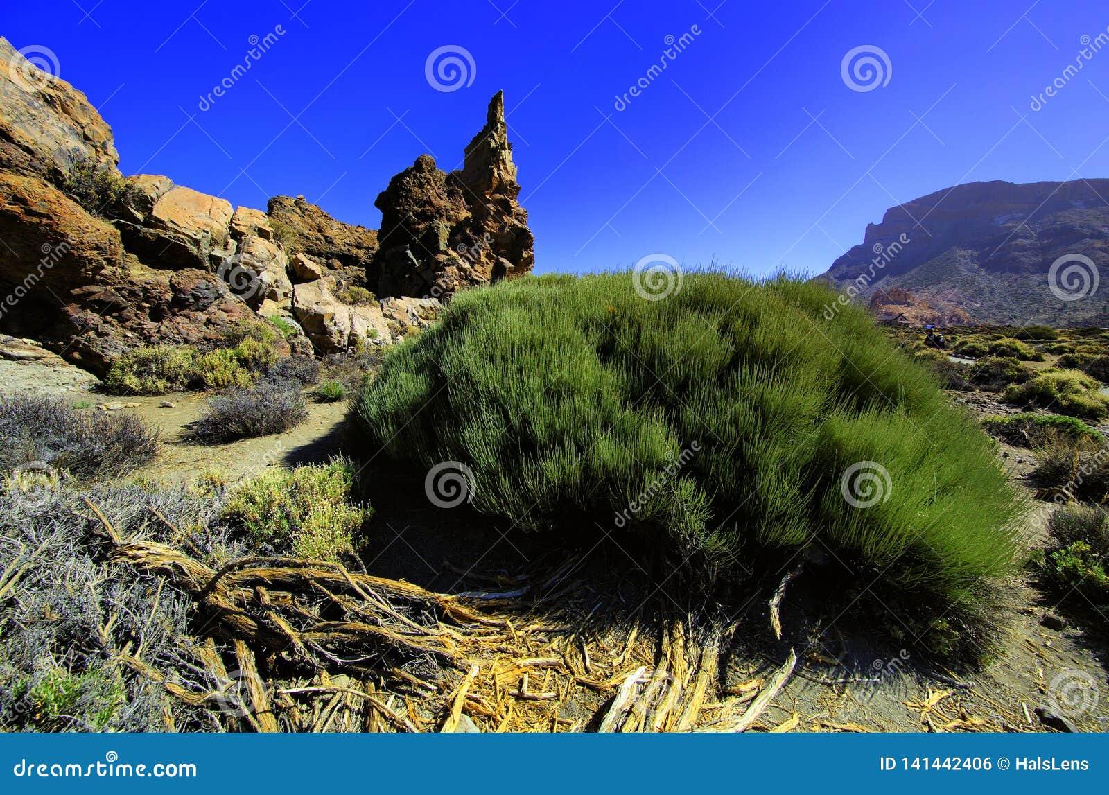 Vulkaniska berg av Tenerife