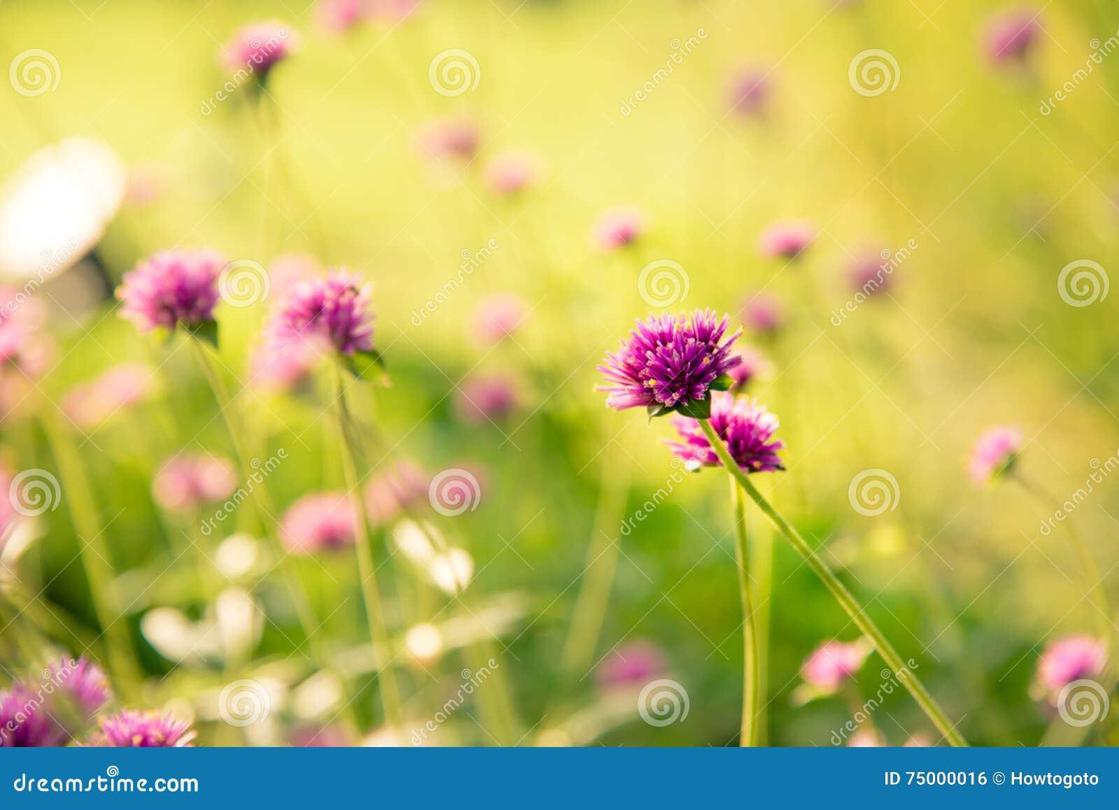 Vuurwerkbloem Violette bloem in het harde zonlicht