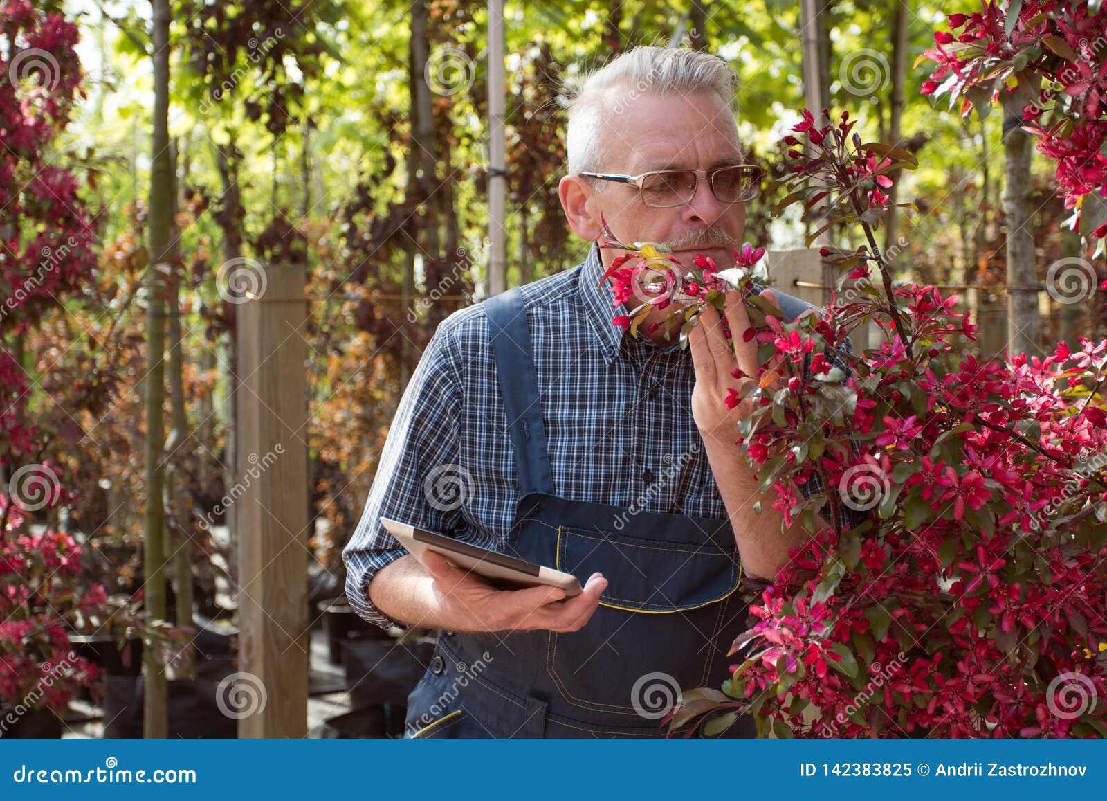 Vuxen trädgårdsmästare nära blommorna Händerna som rymmer minnestavlan I exponeringsglasen ett skägg, bärande overaller I trädgår