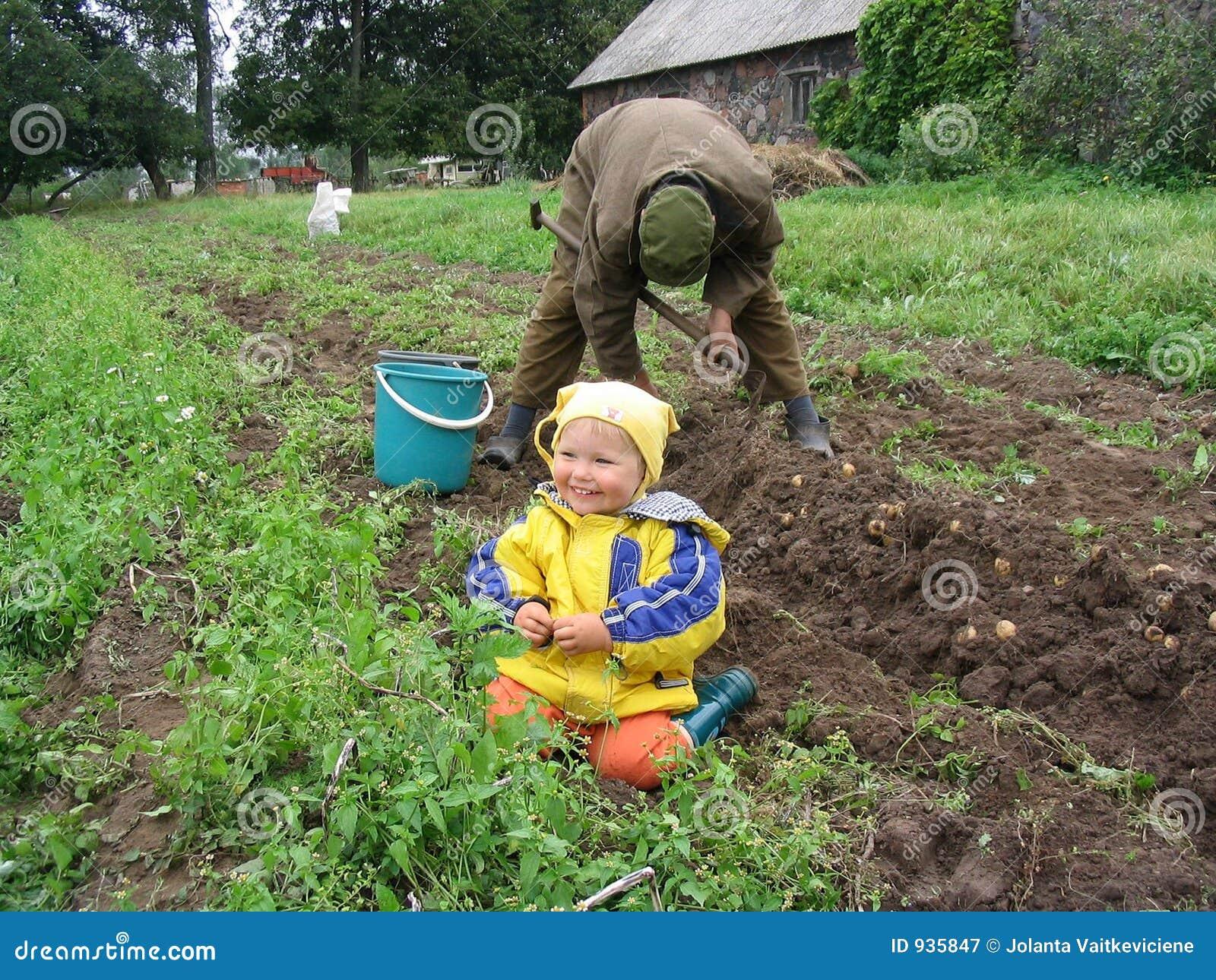 Würzen Sie, wenn Kartoffeln heraus gegraben werden