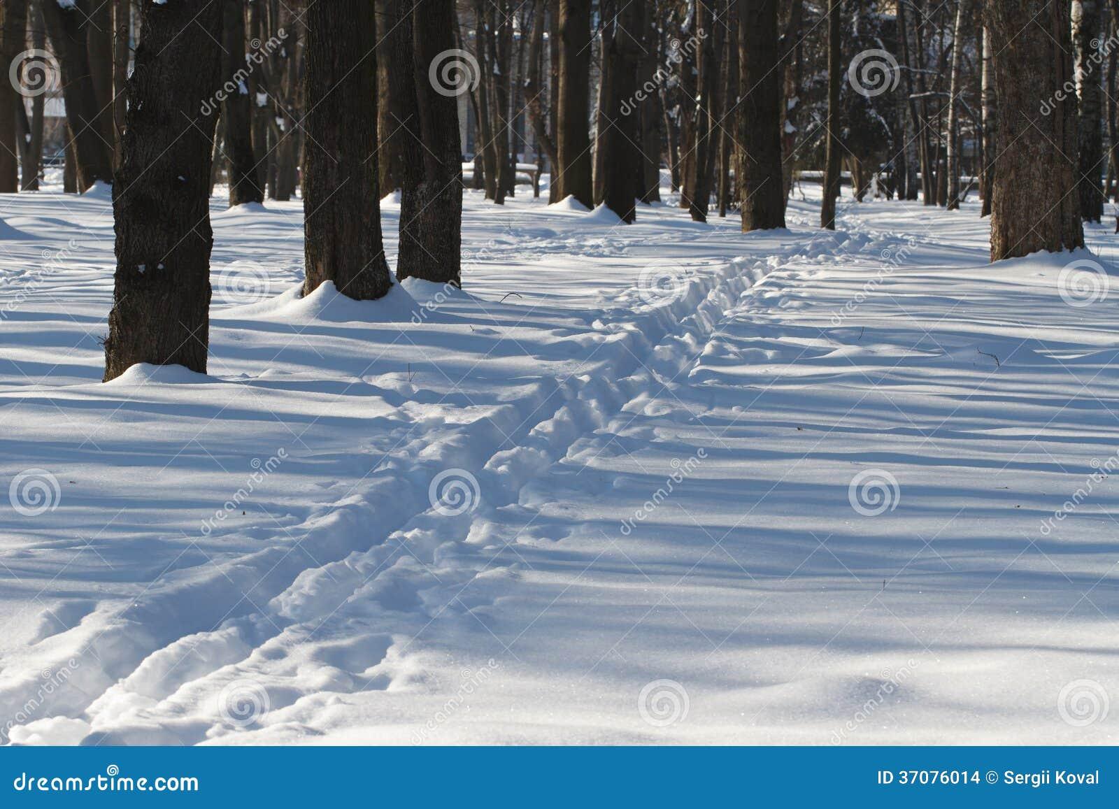 Download Wąska ścieżka W śnieżnym Lesie. Zdjęcie Stock - Obraz złożonej z christmas, janus: 37076014