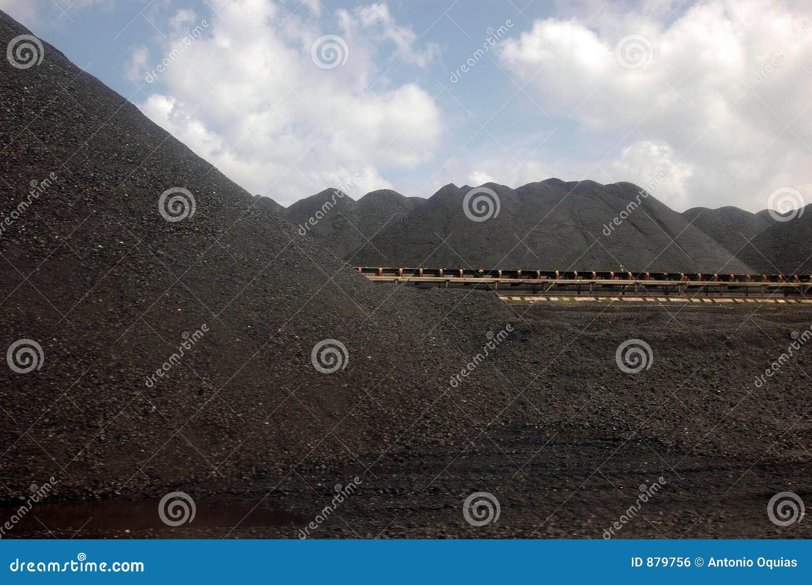 Władze roślin węgla