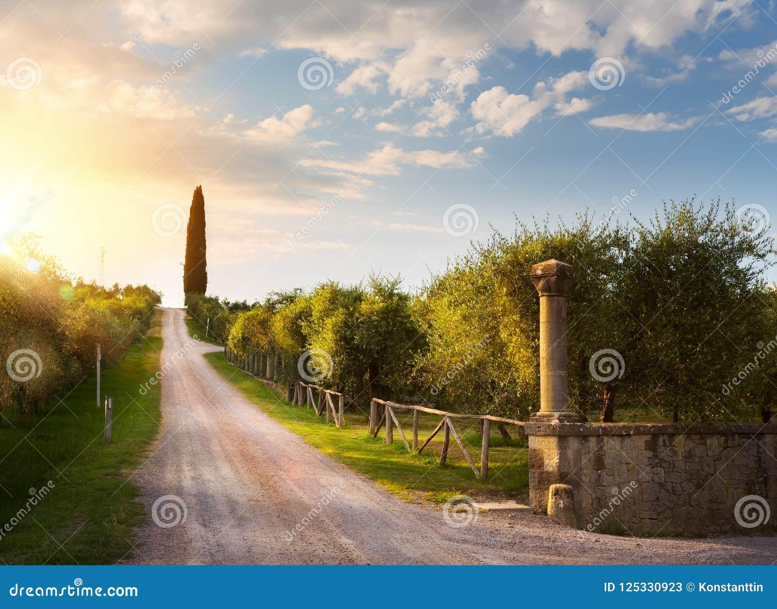 Włochy wsi krajobraz z wiejską drogą i starym oliwnym orch