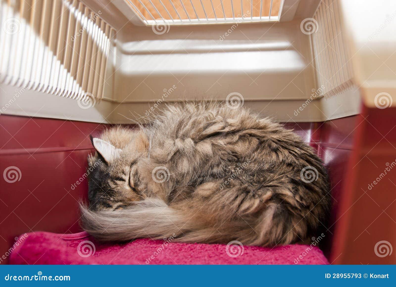 Wśrodku kota przewoźnika