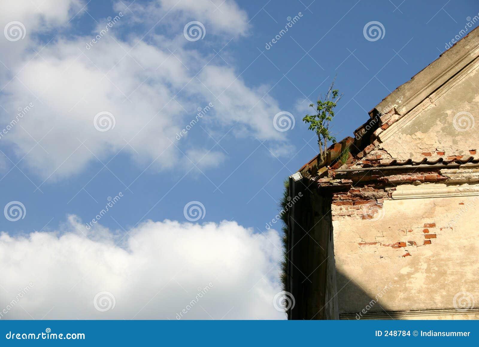 W domu na dach niebo
