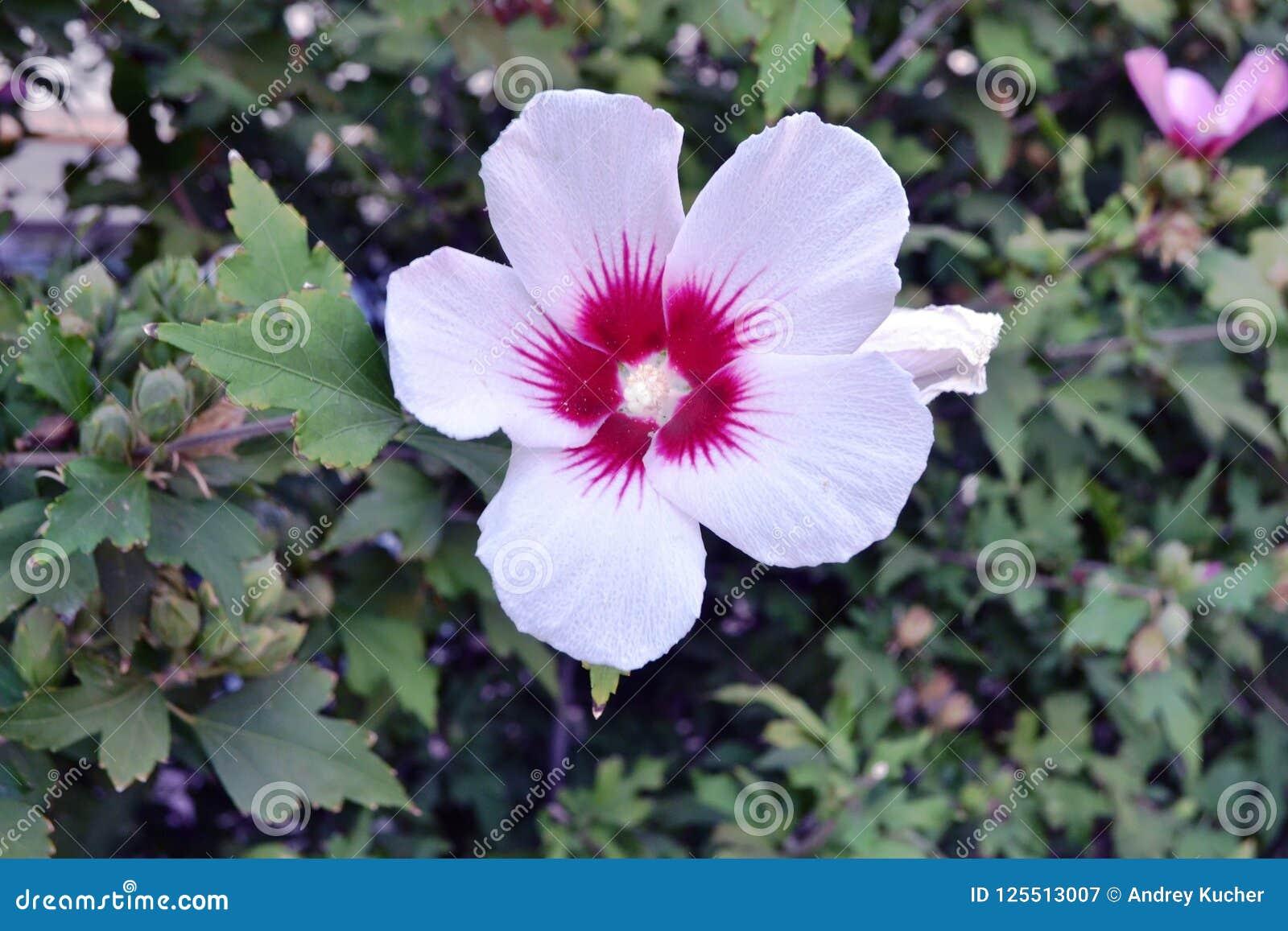 W górę biel zamknięty kwiat botanika