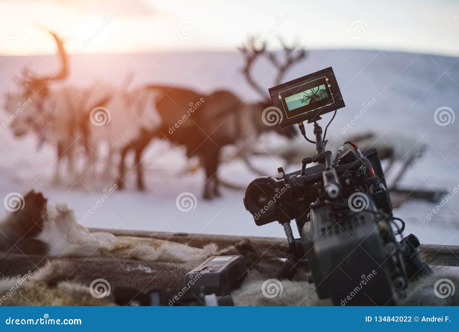 W górę kamera wideo na tle zima zmierzch i deers