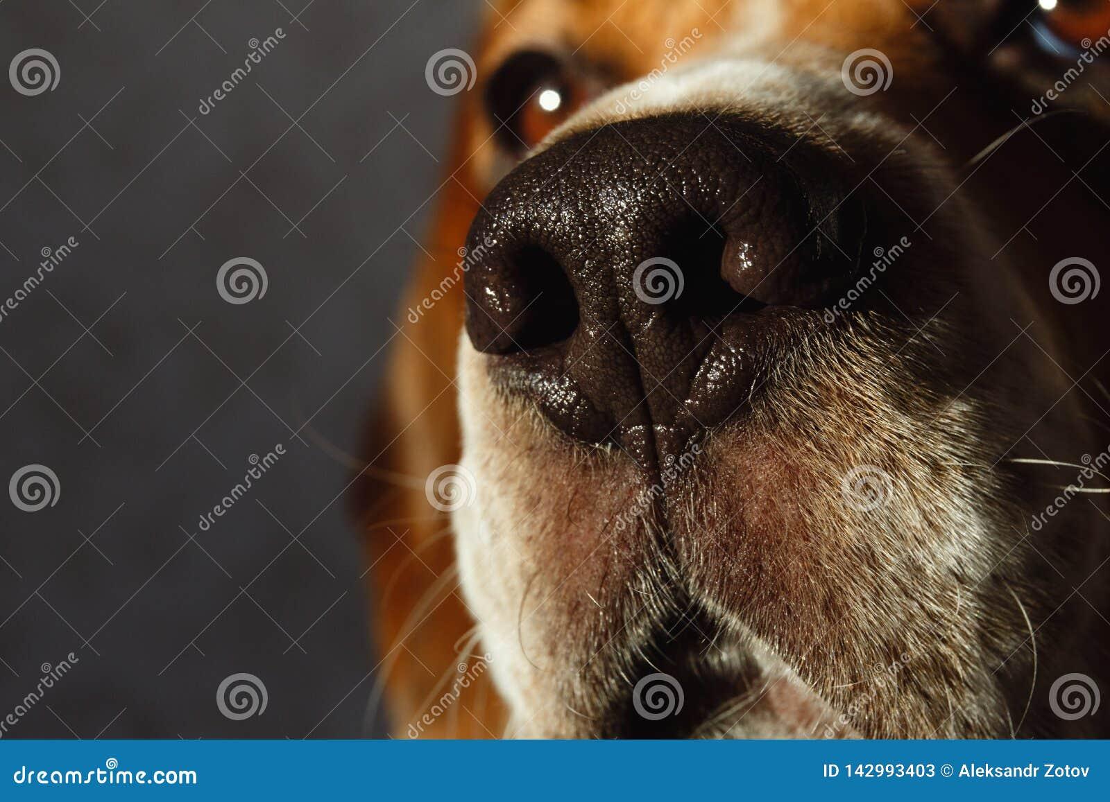 W górę portreta psi obsiadanie na psim łóżku