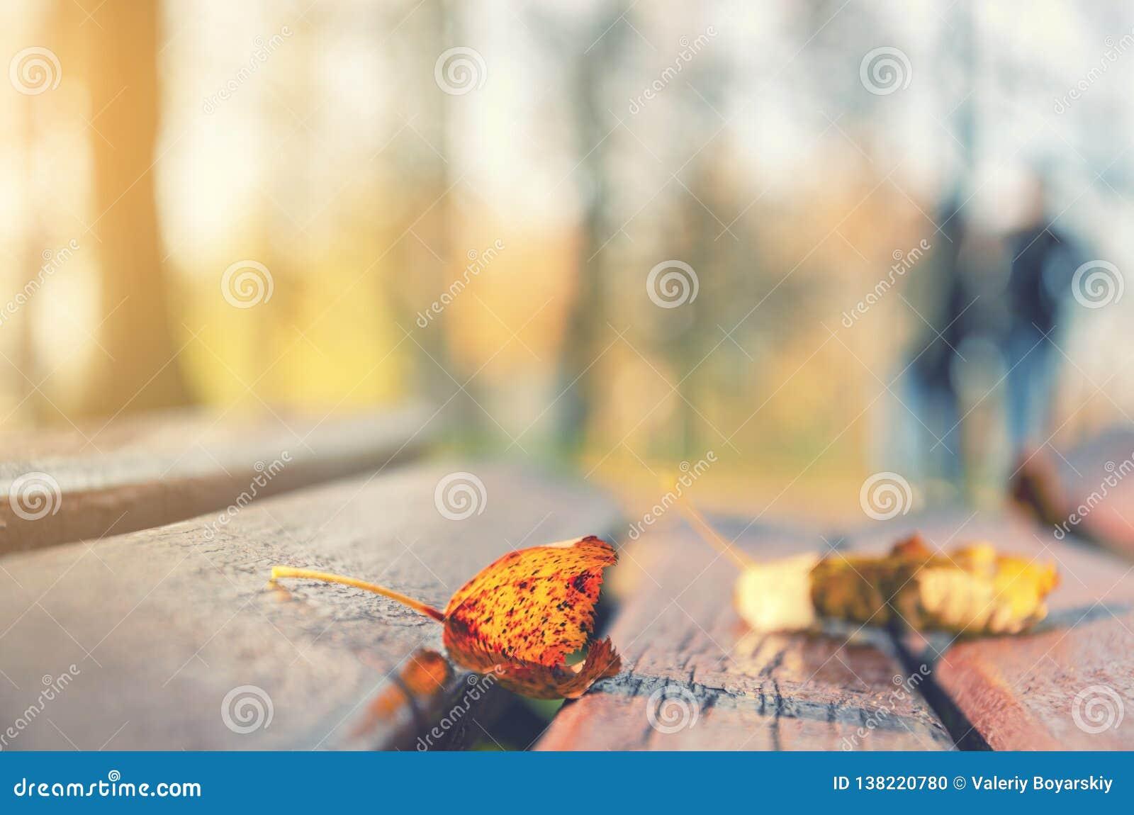 W górę suchego pomarańczowego liścia na ławce w parku