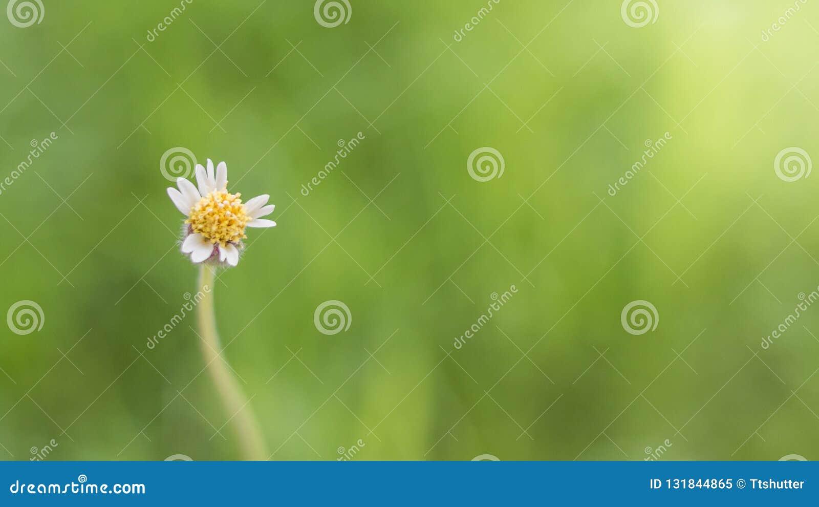 W górę trawa kwiatów