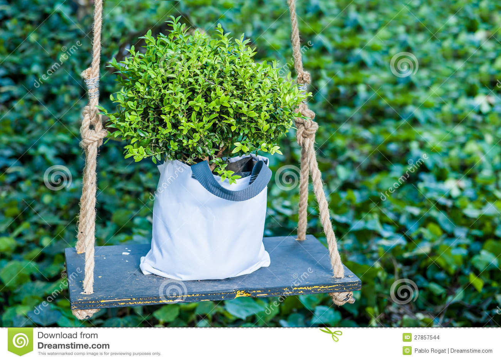 W huśtawce zielona roślina