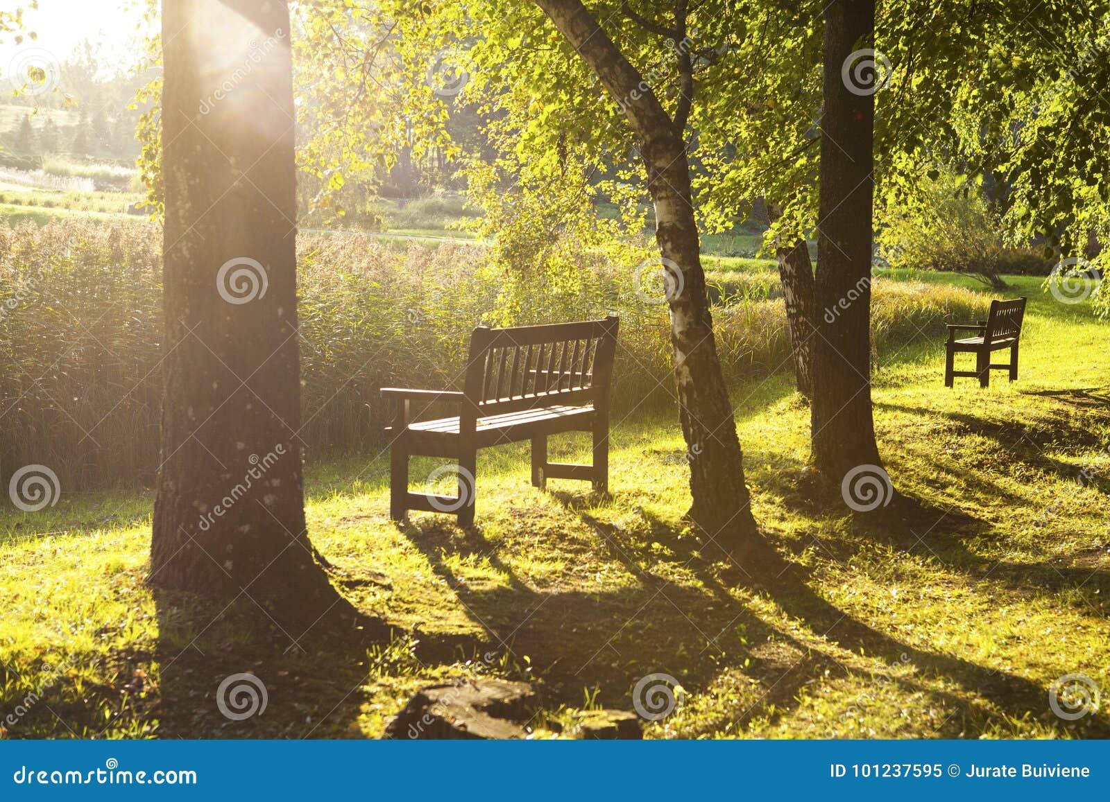 W jesień parkowa ławka