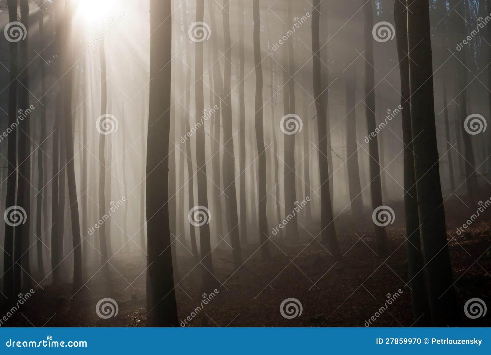 W jesień ranek mglisty las