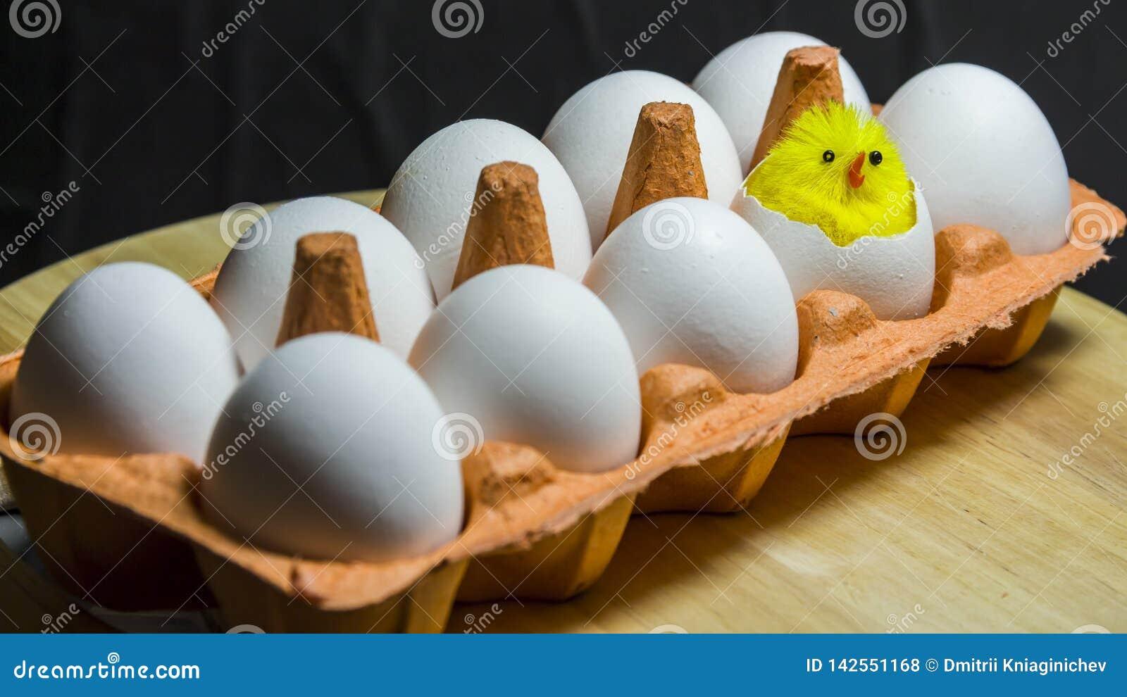 W kartonie są dziesięć jajek Mały kurczątko klujący się od jeden jajka Pojęcie jest narodziny nowy życie