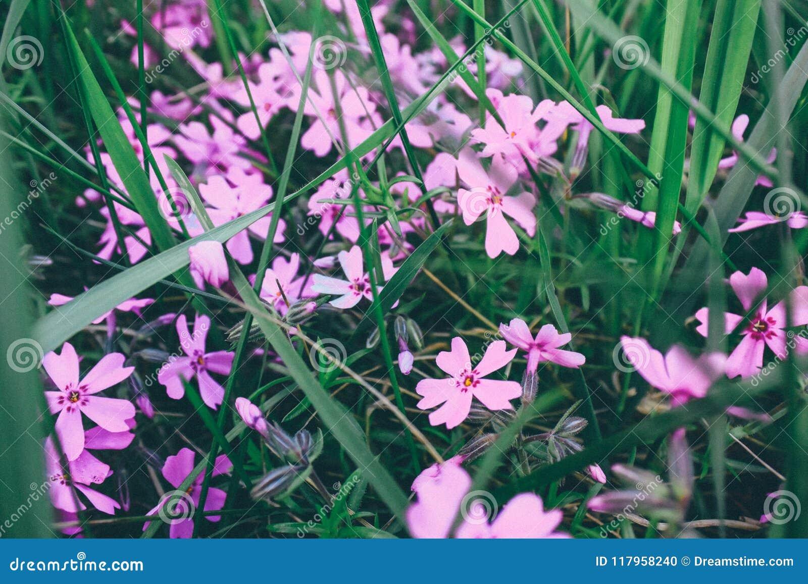 W kwiatu ogródzie