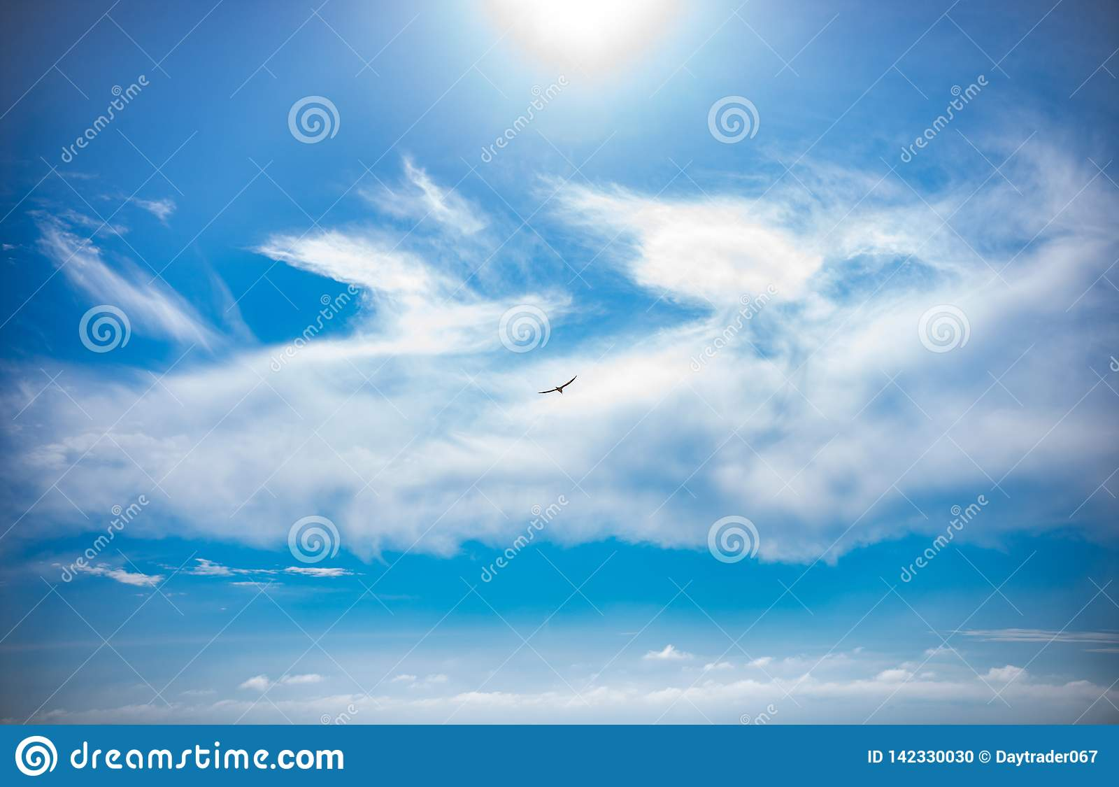 W niebieskim niebie nad czarnym dennym latającym dennego ptaka Seagull