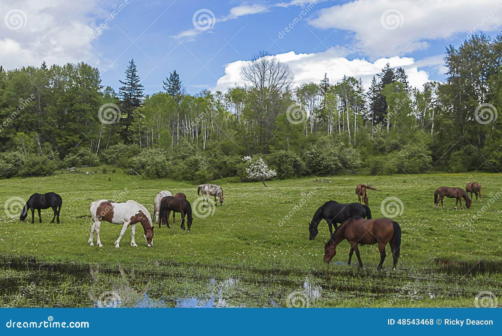 W pastwiskowi koni