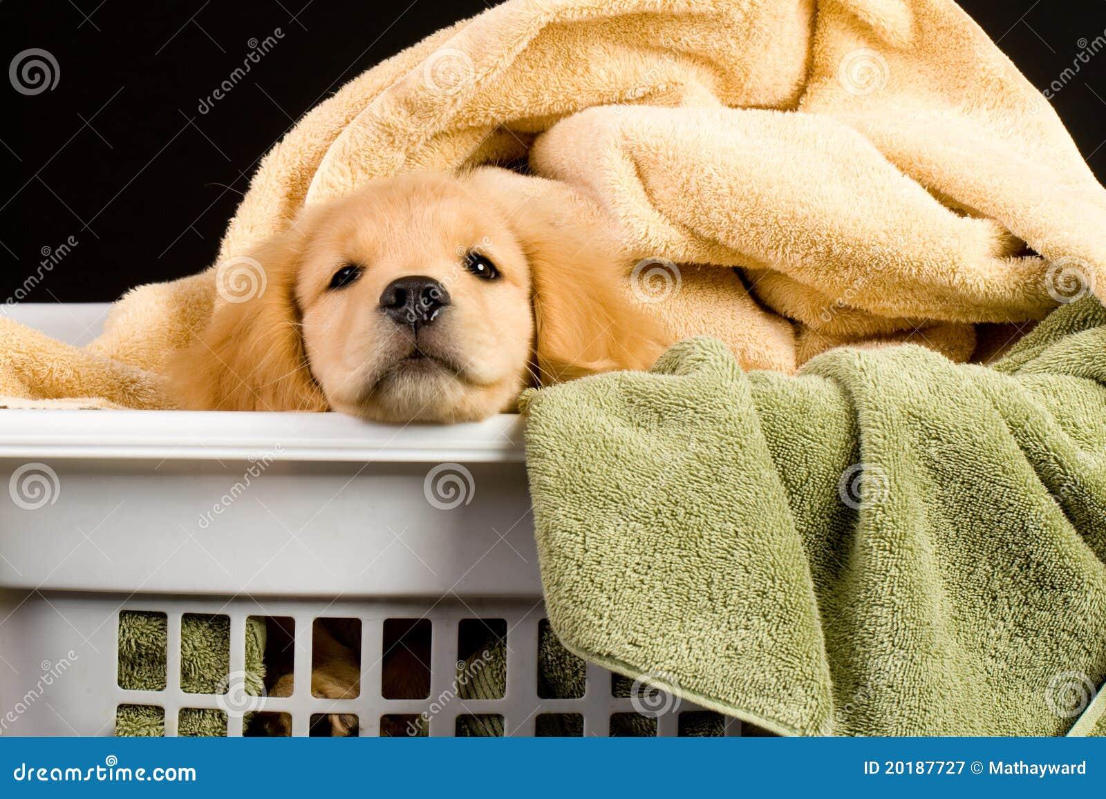W pralnianym koszu miękki szczeniak