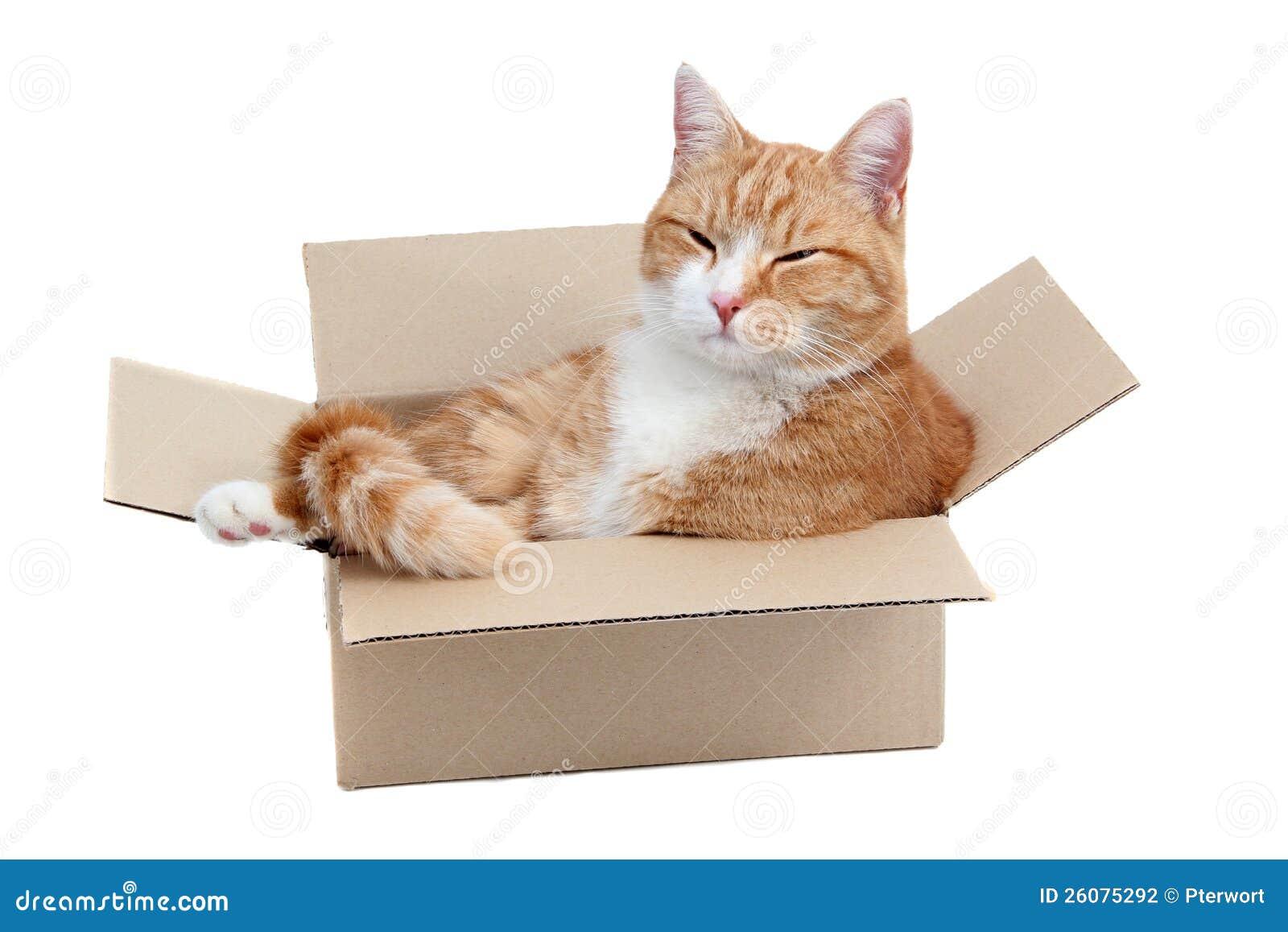 W pudełku relaksujący śliczny tomcat