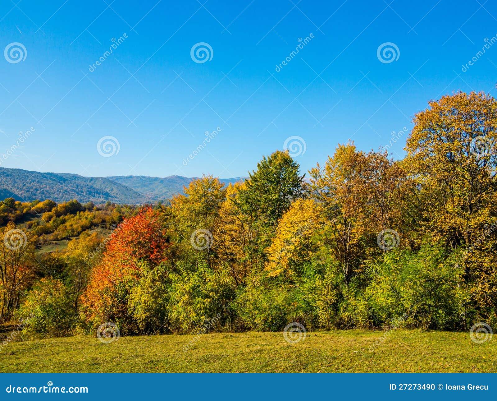 W wsi jesień drzewa
