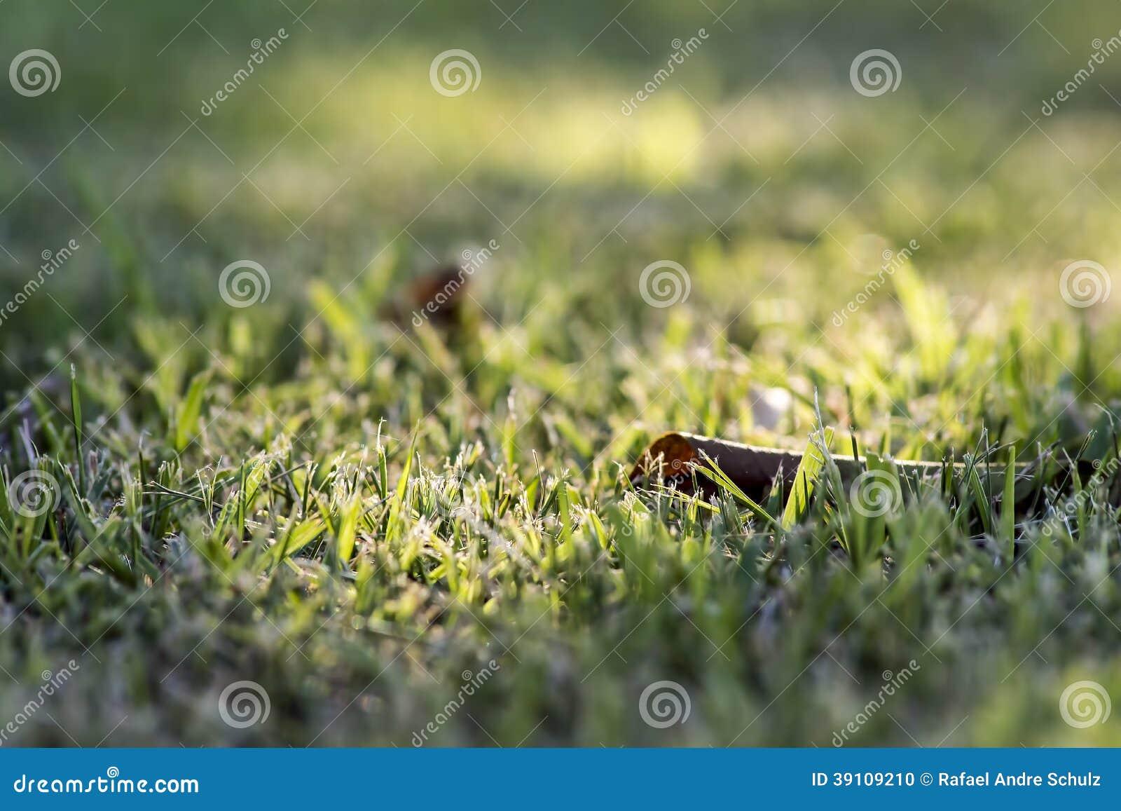 Waar het Gras Groen is