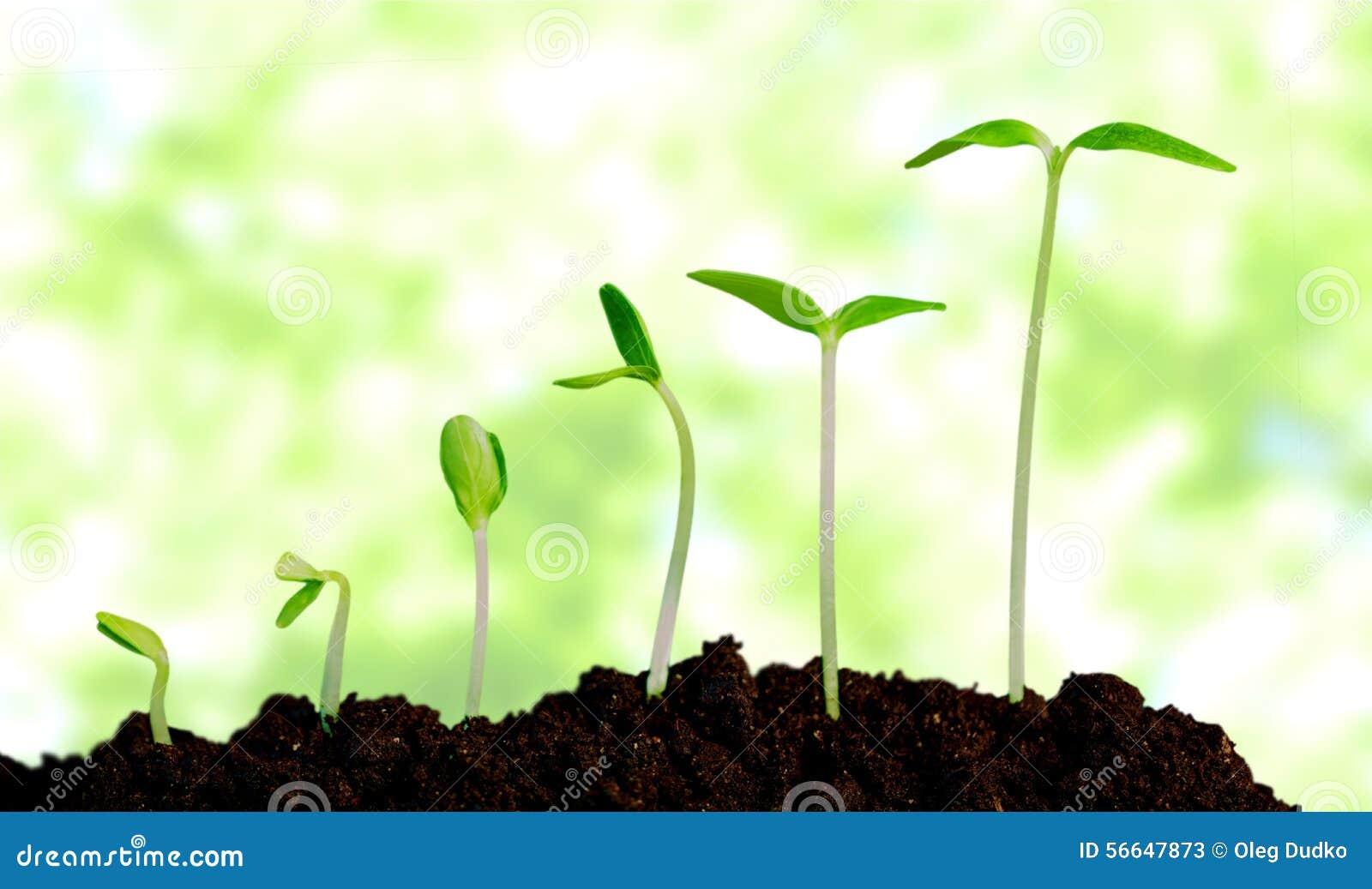 Wachsen Sie und wachsen, Anlage