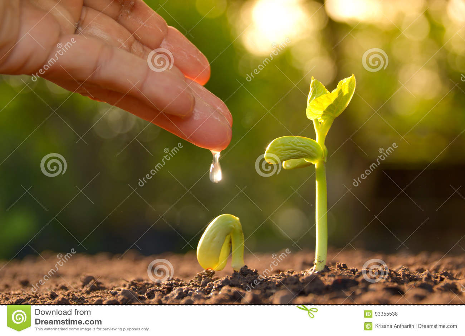 Wachsende Anlagen Betriebssämling Handernährungsund Bewässerungsyoun