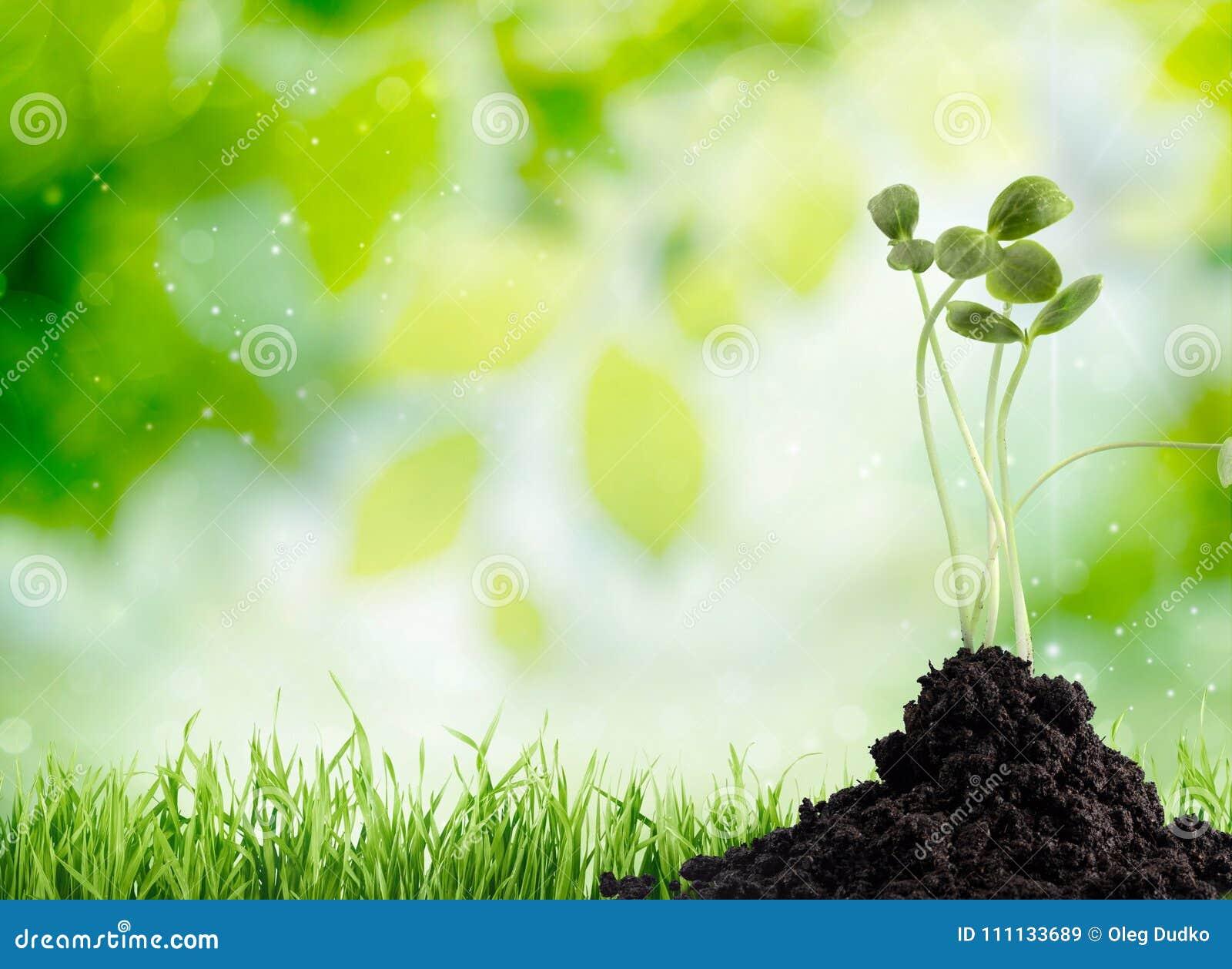 Wachstum des neuen Lebens auf Himmelhintergrund