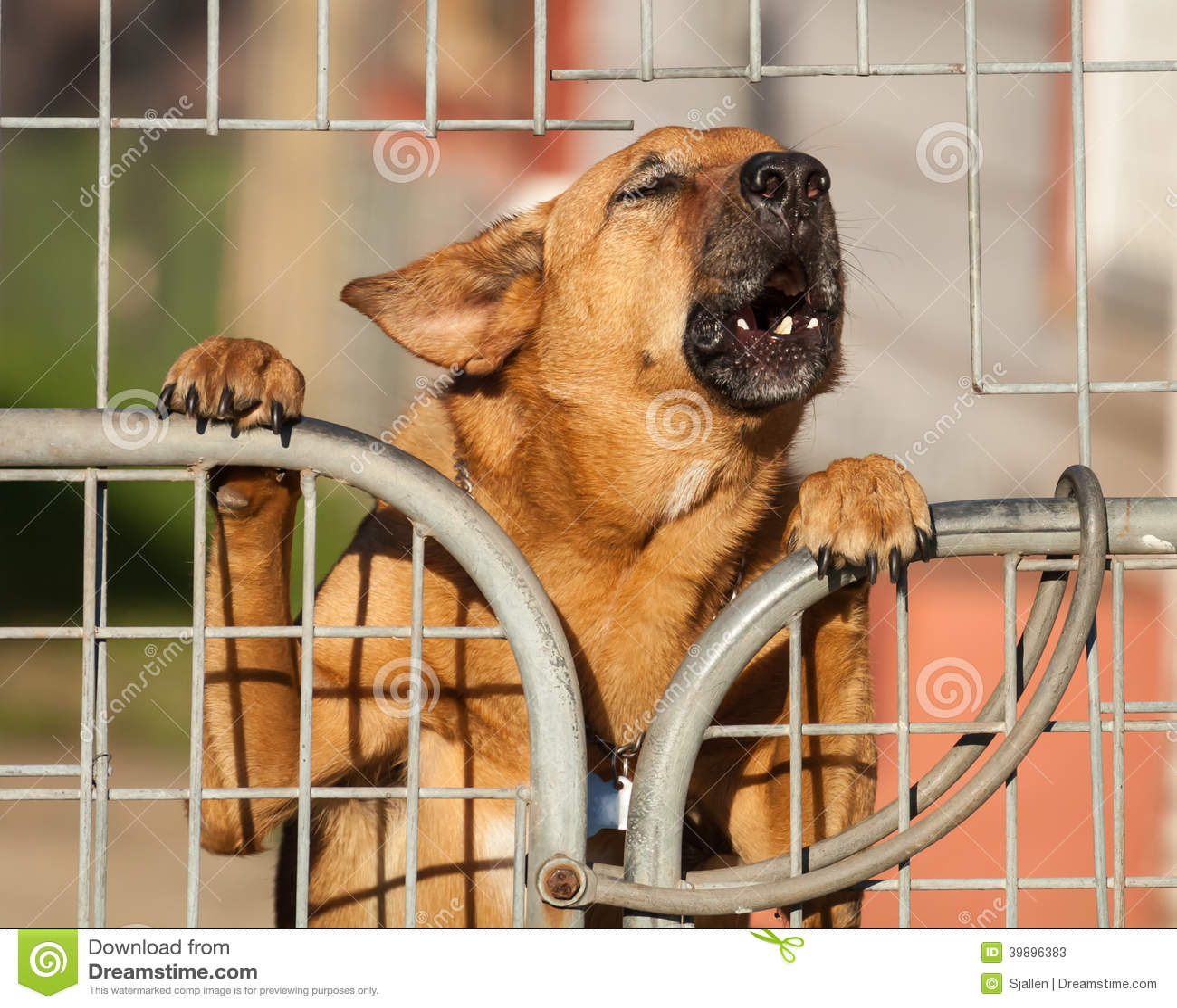 Wacht Dog Barking een Waarschuwing achter een Draadomheining