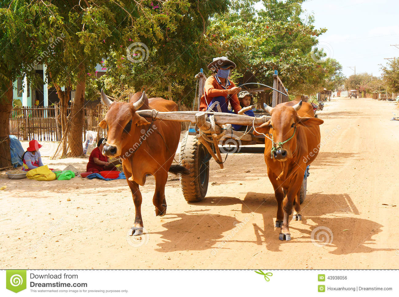 Cow Pulling Wagon : Wagon transport at vietnam countryside editorial photo