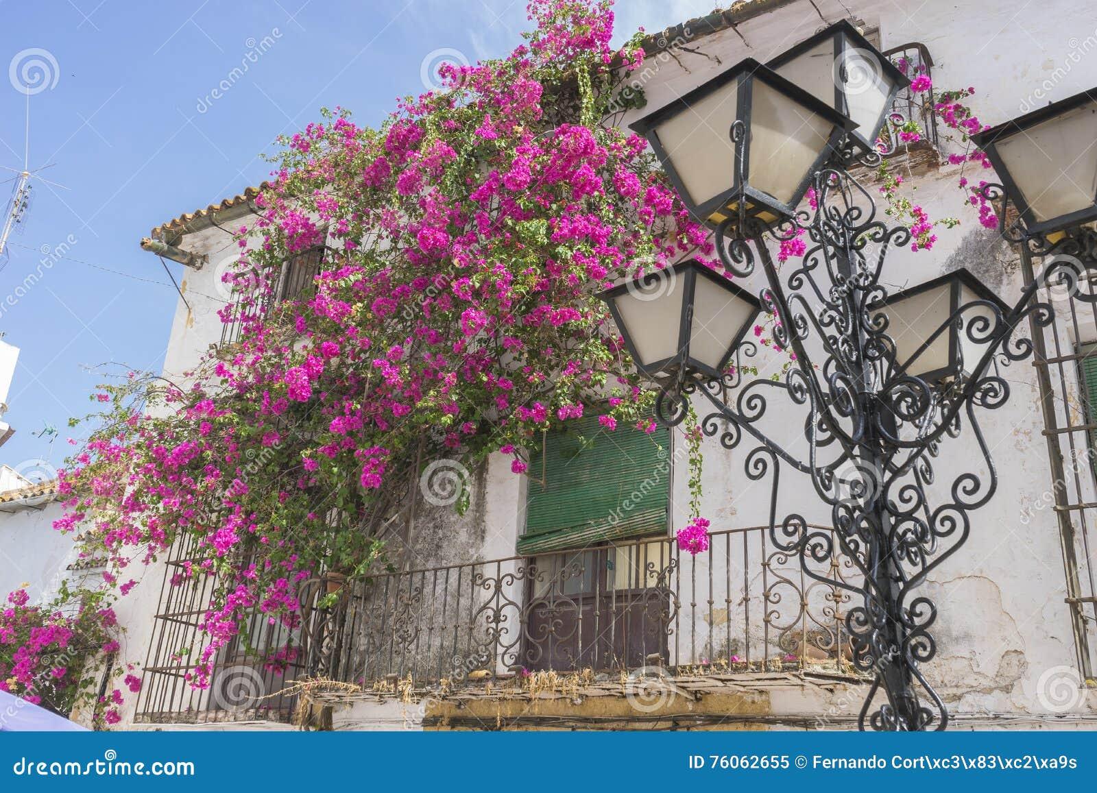 Wakacje, architektura i ulicy biali kwiaty w Marbella A,