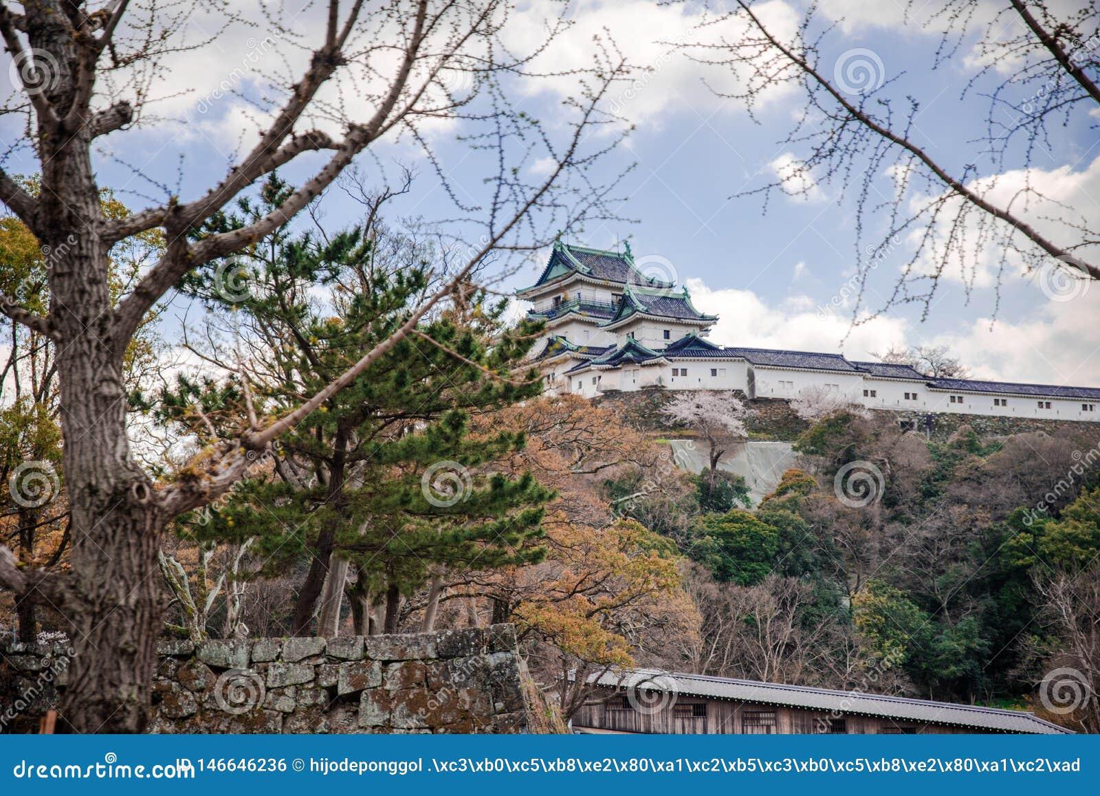 Wakayama Roszuje pozycję na wzgórzu z czereśniowymi okwitnięciami w foregound