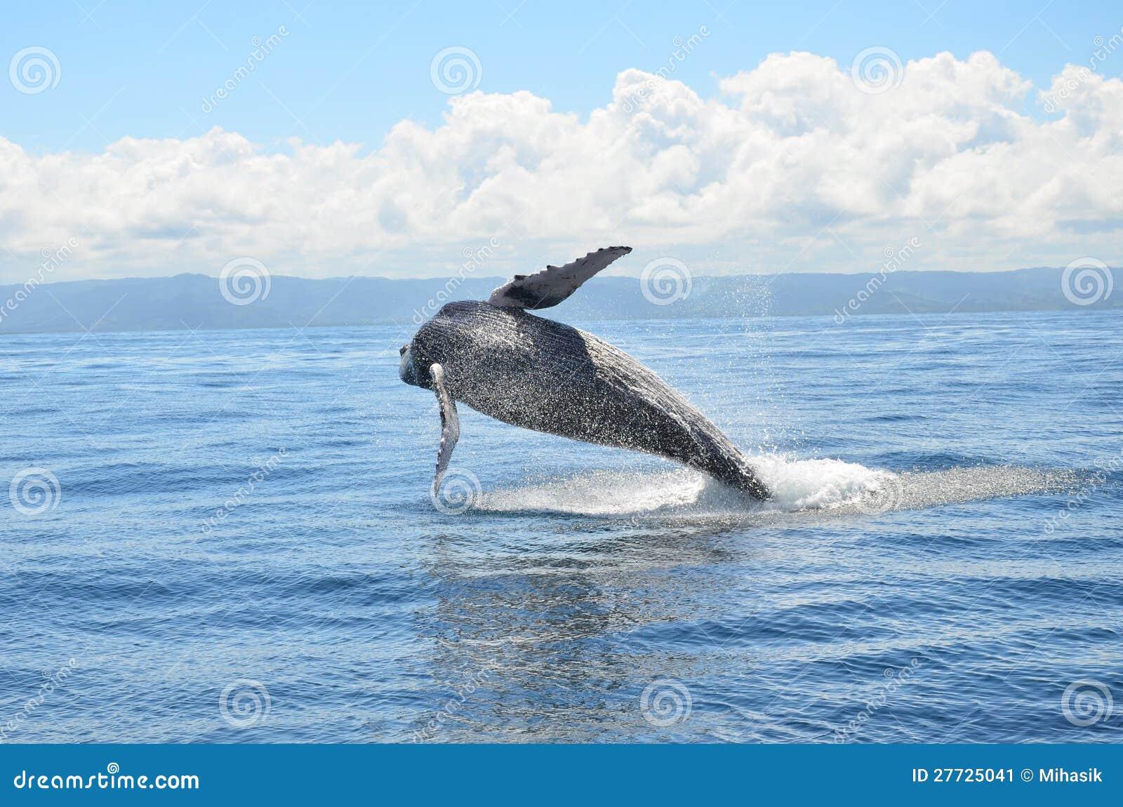 Wal springen
