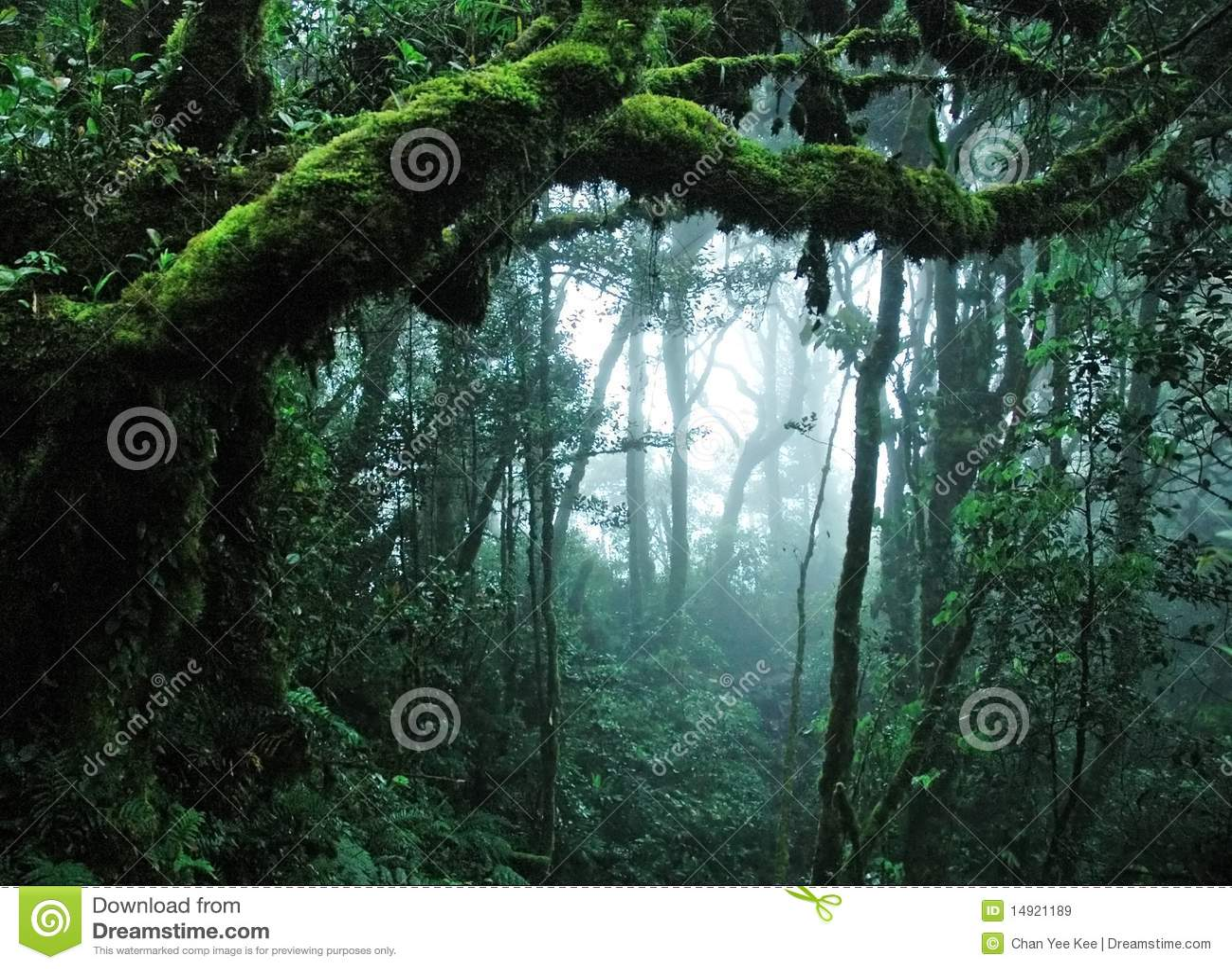 Wald des tropischen Regens