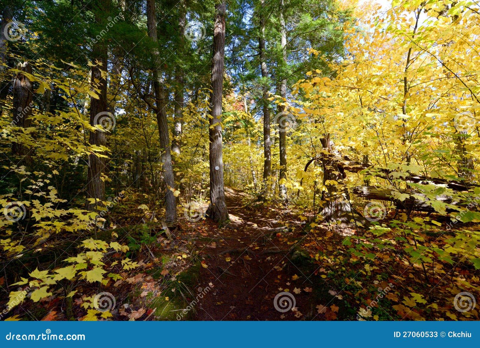 Wald Im Algonquin Park Kanada Stockbild Bild Von Herbst Blatt
