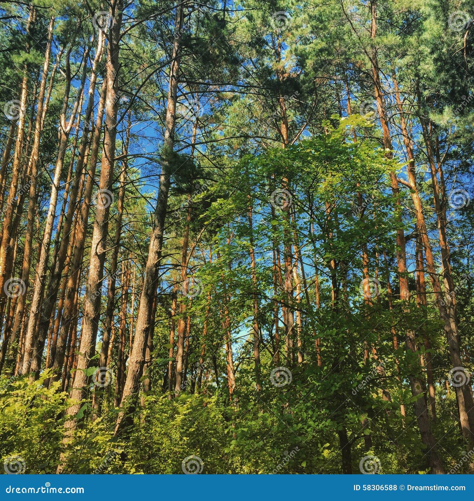 Wald In Kiew Stockfoto. Bild Von Bäume, Ukraine, Wald