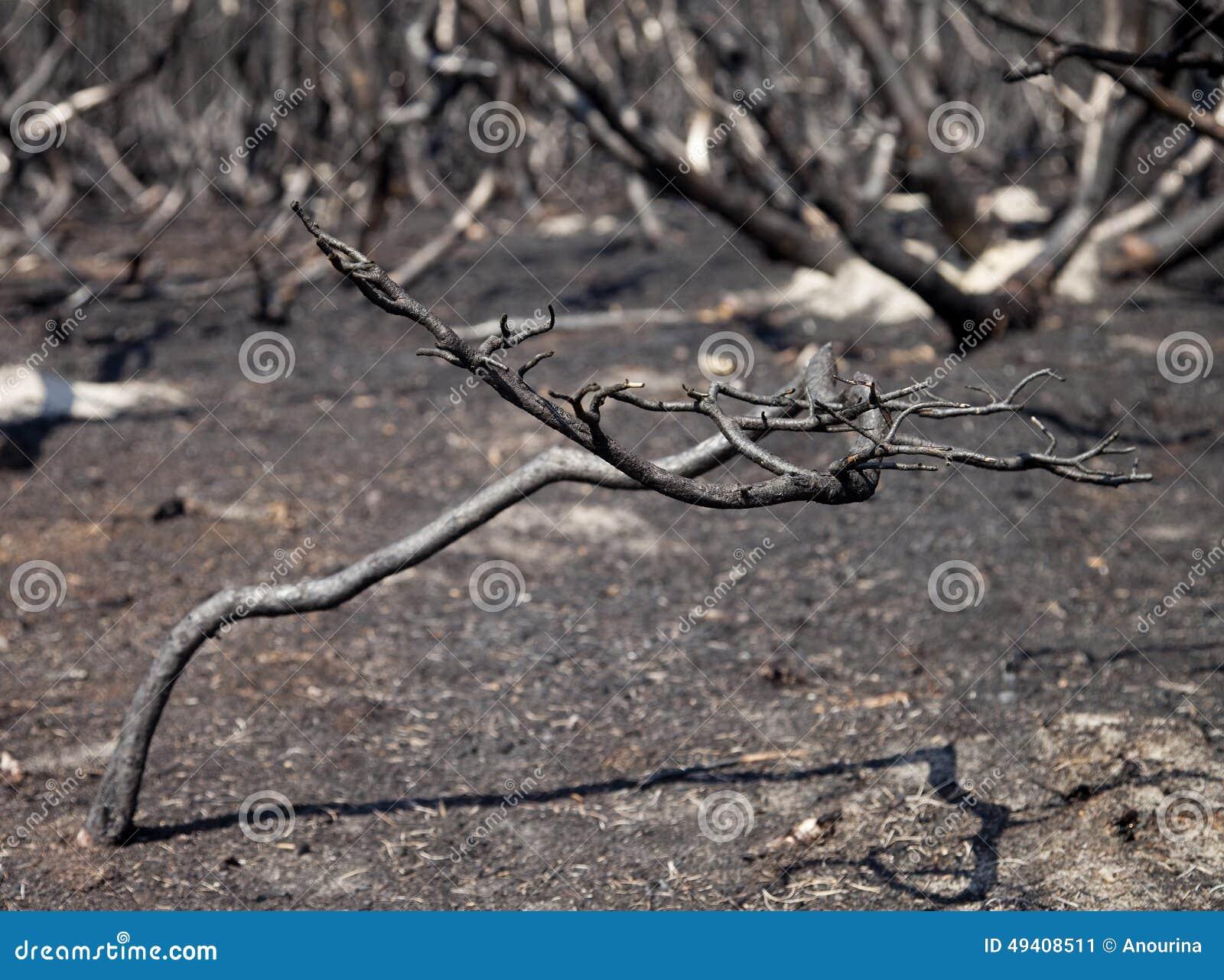 Download Wald Nach Feuer Mit Gebrannten Bäumen Stockbild - Bild von wald, emissionen: 49408511