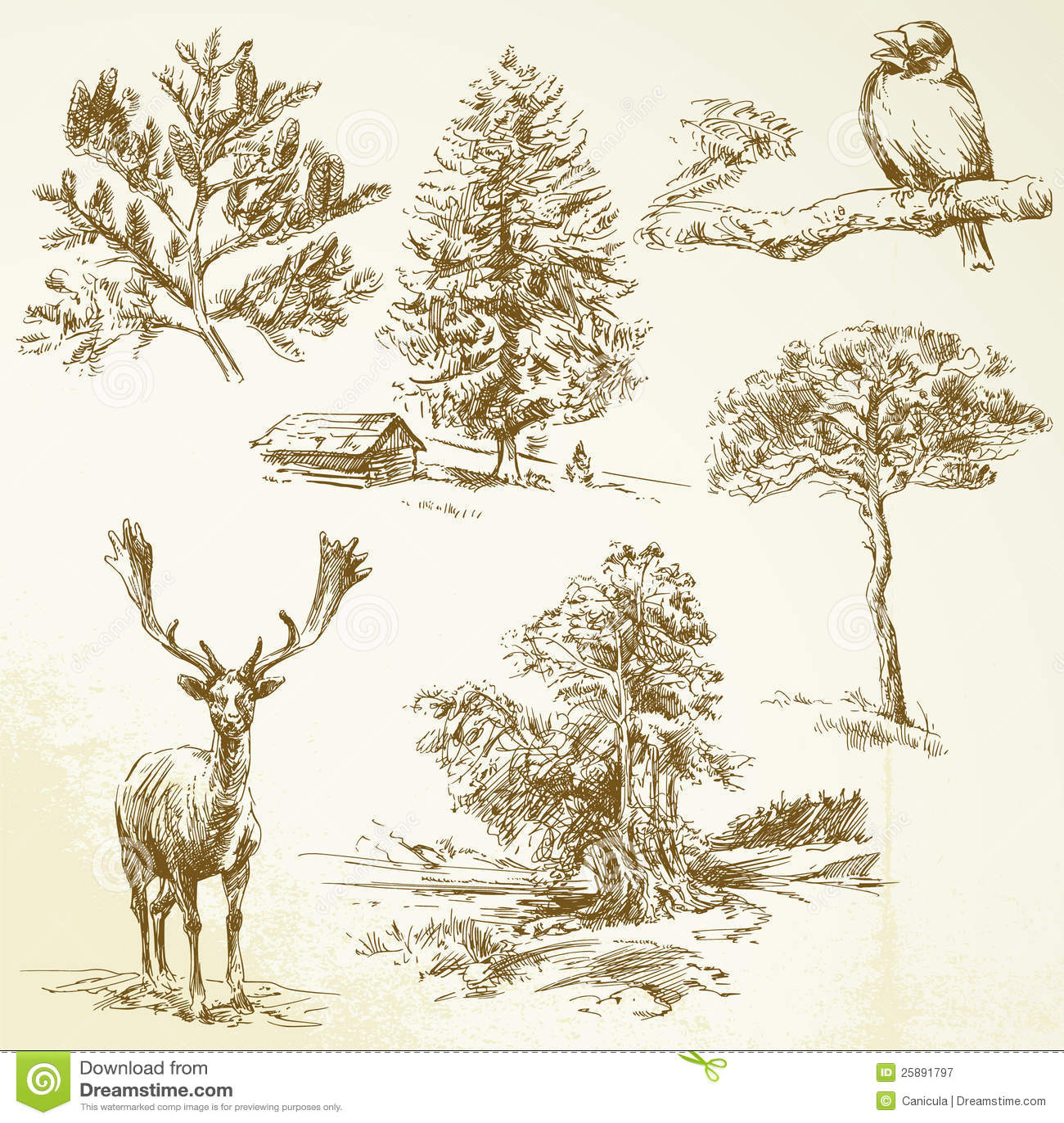 Wald, Tiere, Natur Lizenzfreie Stockfotografie