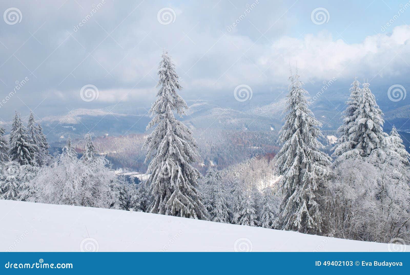 Download Wald und Wintersonne stockbild. Bild von nave, frost - 49402103