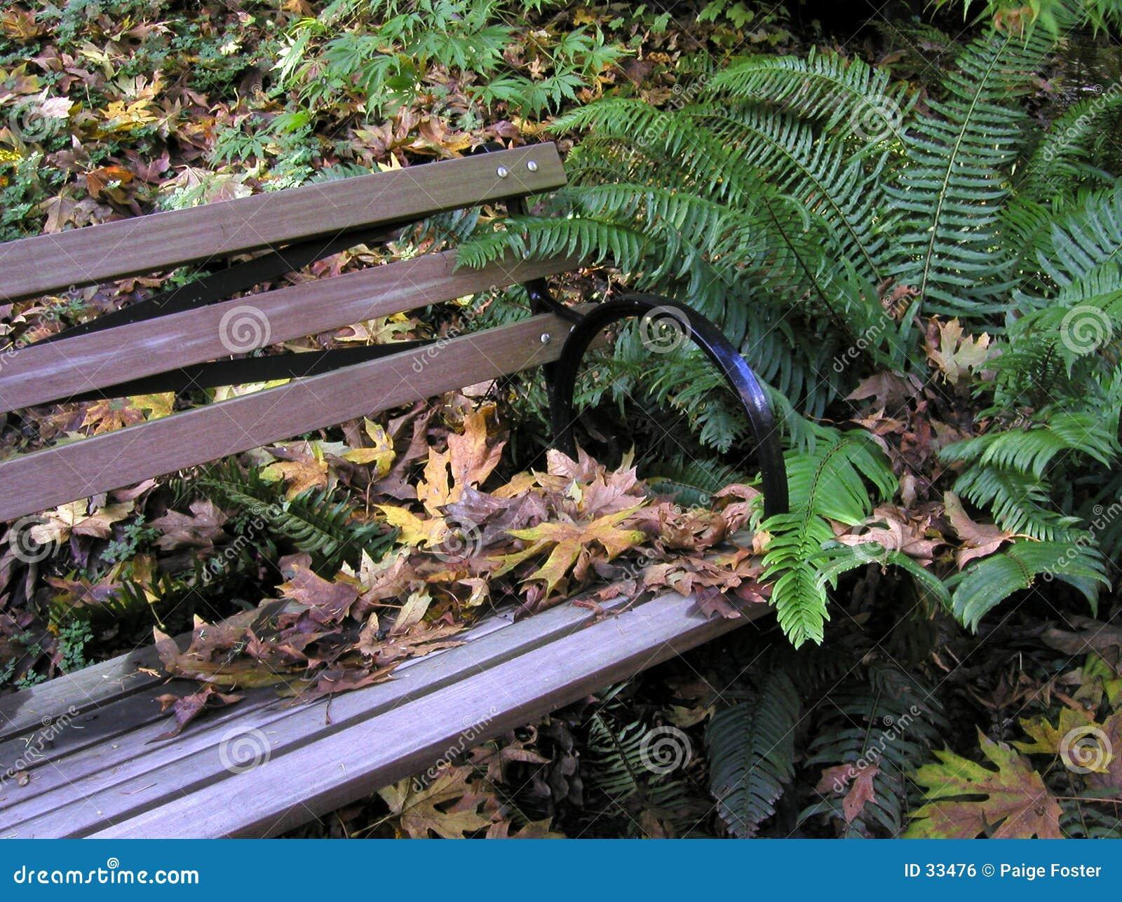 Download Waldbank stockfoto. Bild von bank, park, braun, jahreszeit - 33476