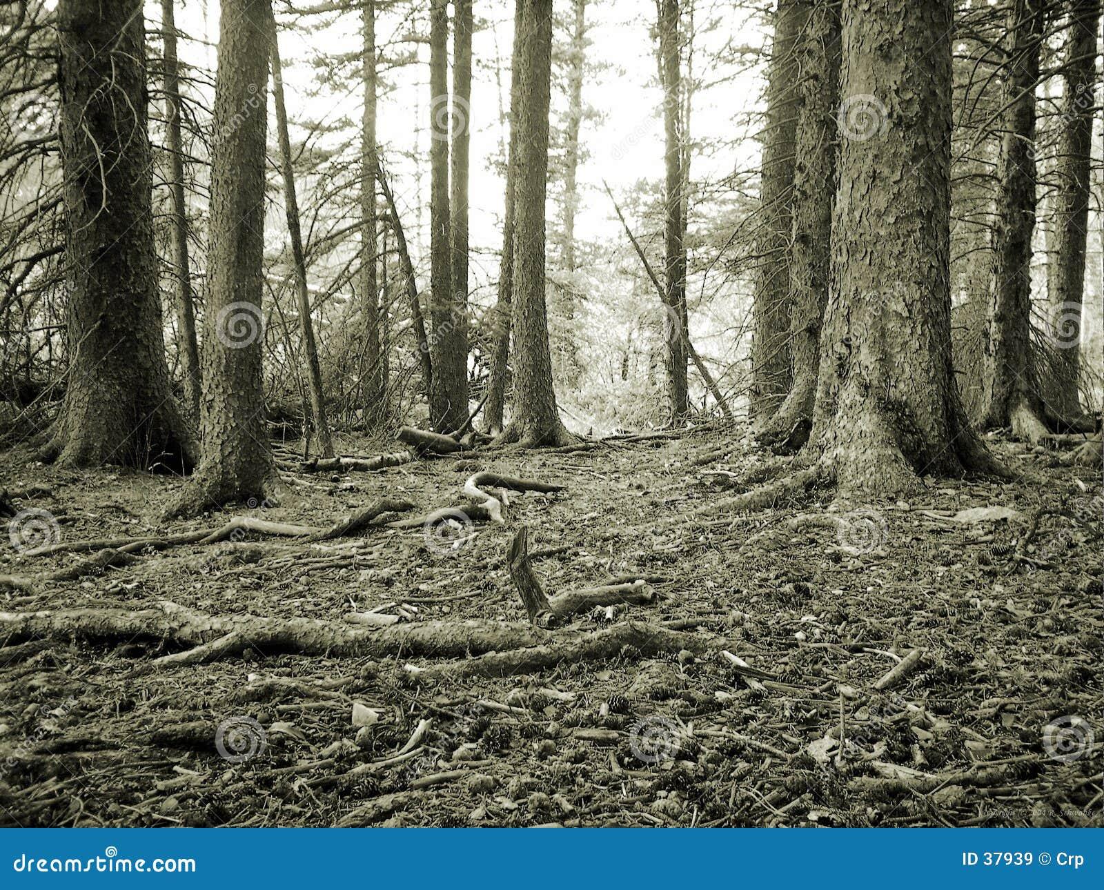 Waldfußboden