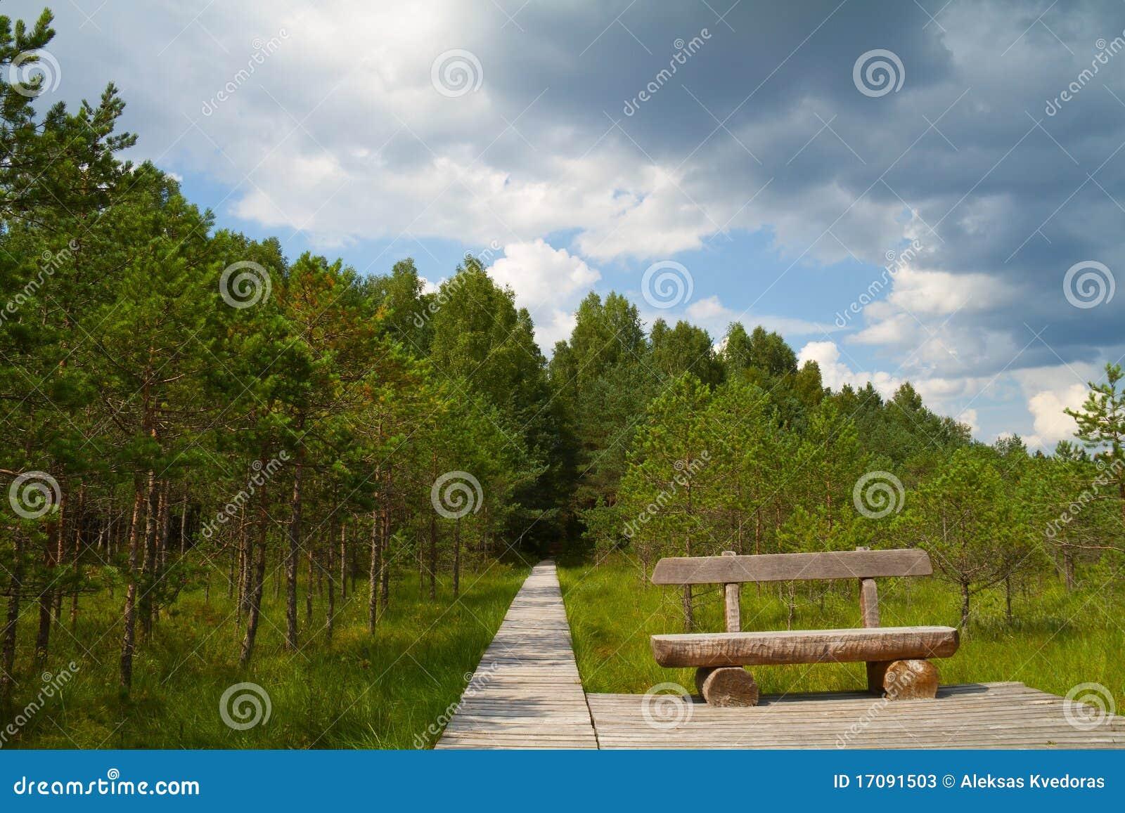 Waldpfad, eine Bank