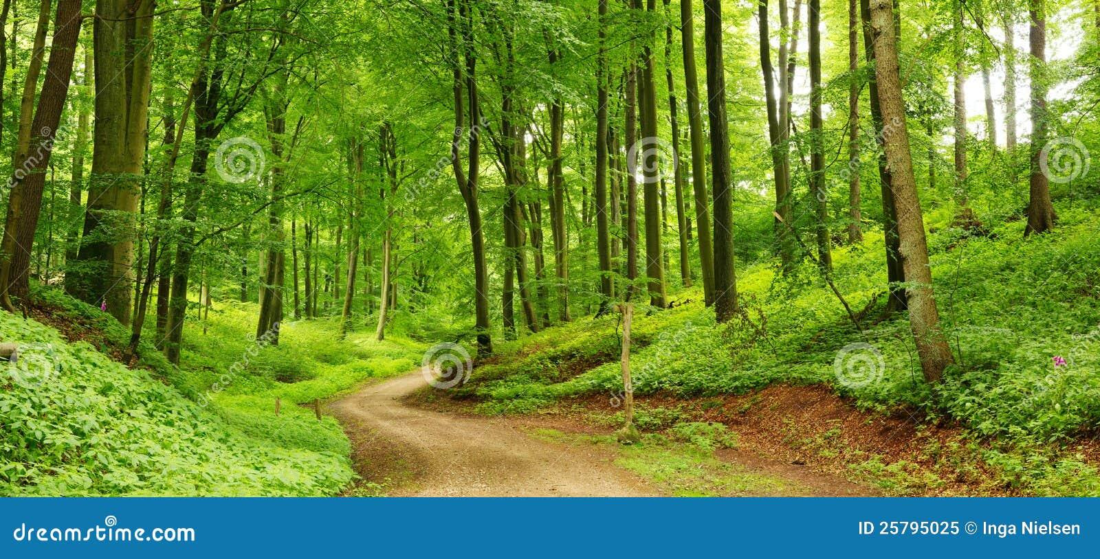 Waldpfadpanorama