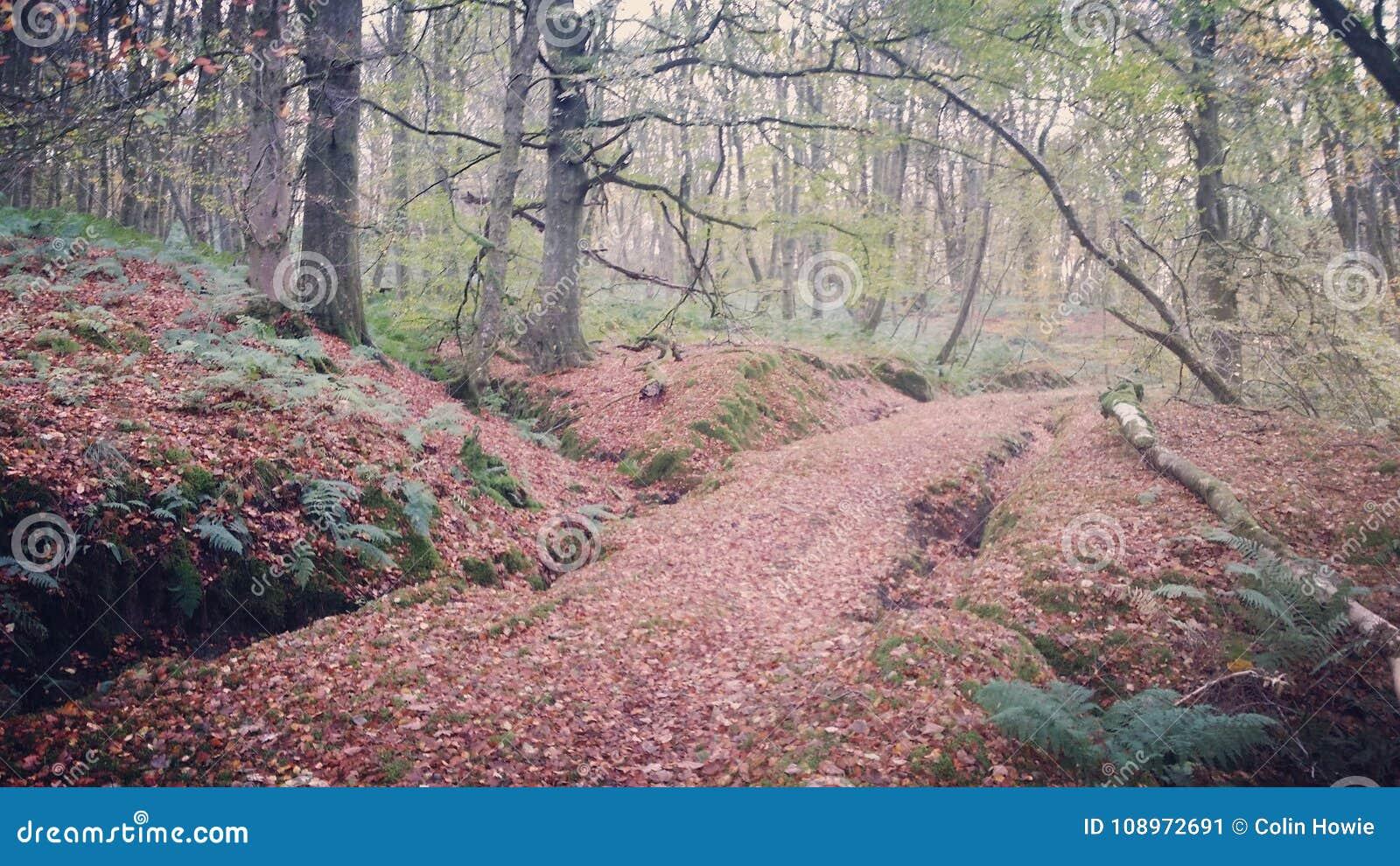 Waldweg, Lanfine-Zustand im Herbst