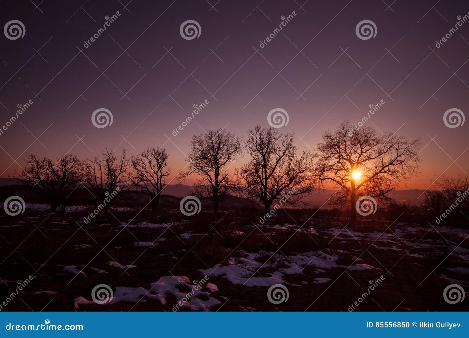 Waldweg unter Sonnenuntergangsonnenstrahlen Schöner Sonnenuntergang mit den orange und roten Wolken hinter einigen Koniferenbäume
