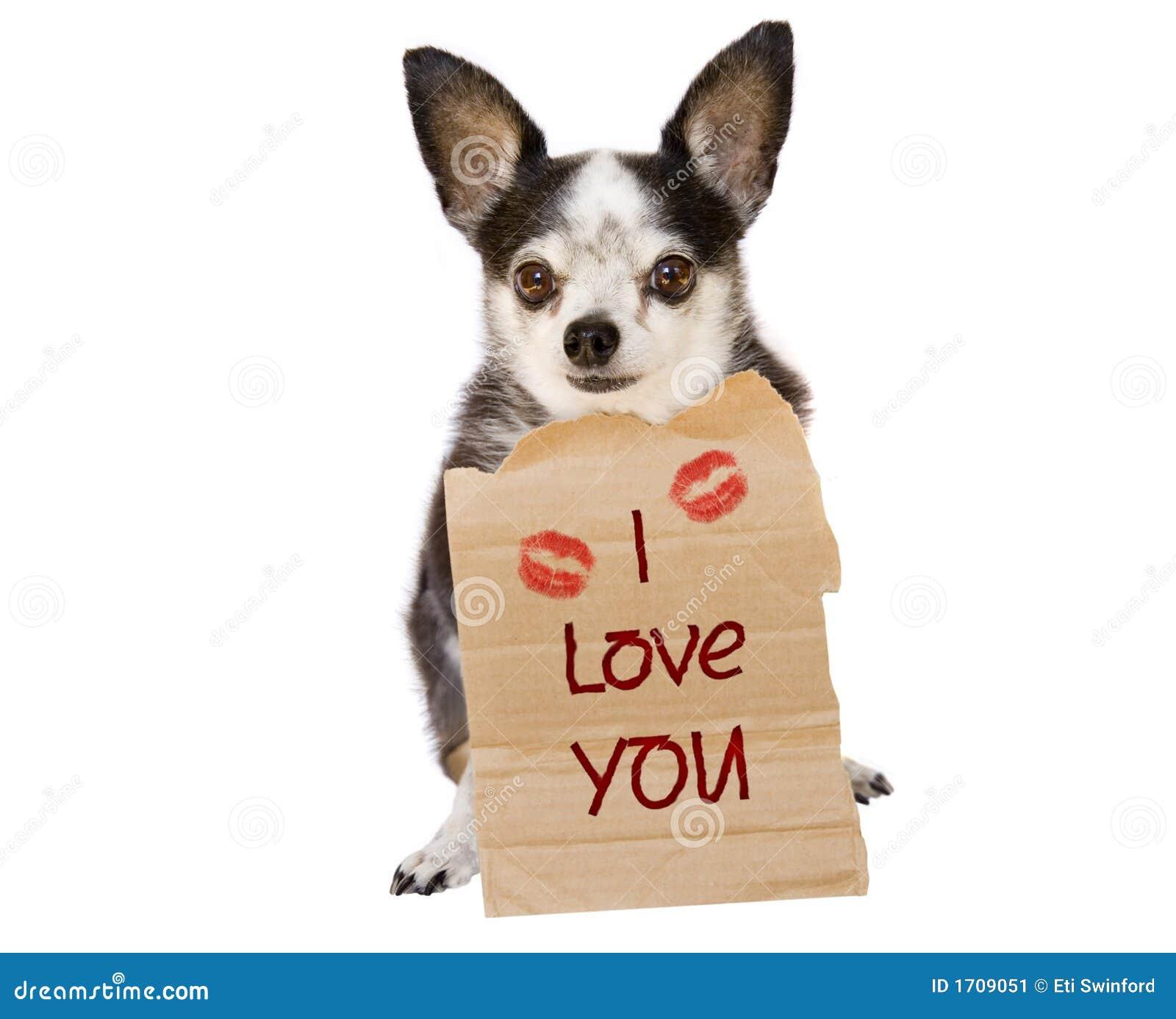 Walentynki psi miłości