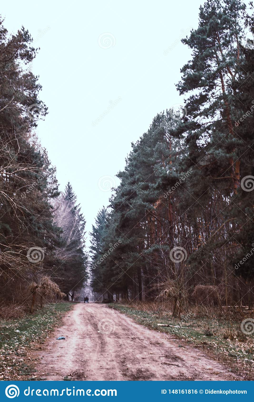 The road is a path in the woods