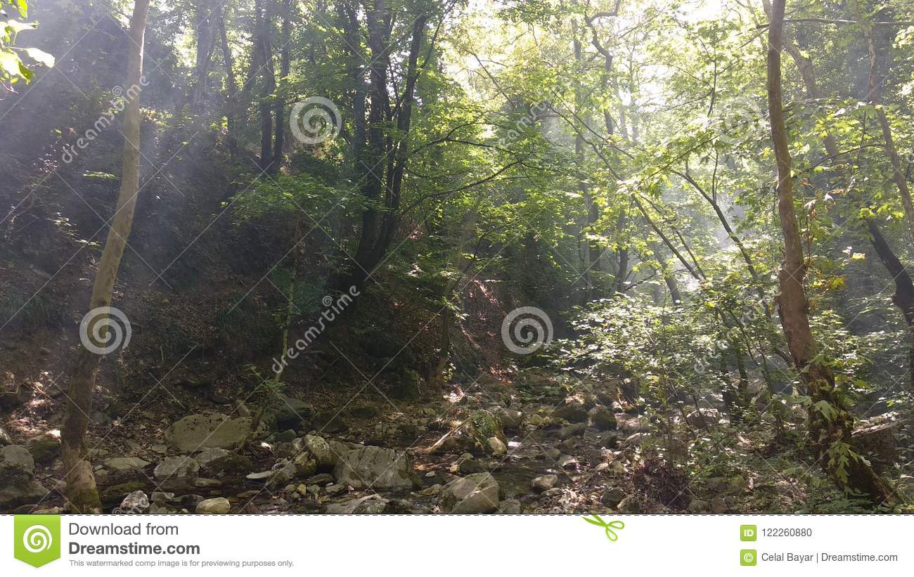 Download Walk in the forest stock photo. Image of hellespoent - 122260880