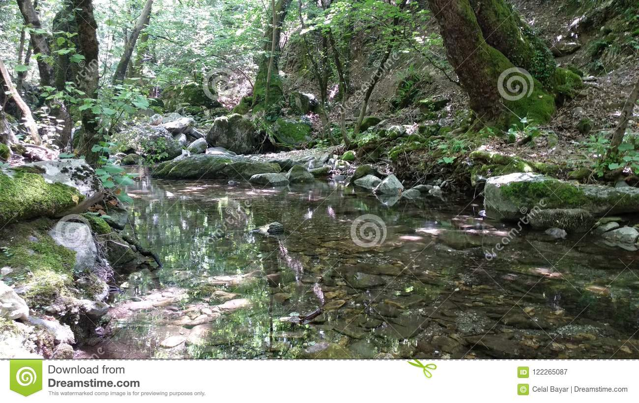 Download Walk in the forest stock image. Image of hellespoent - 122265087
